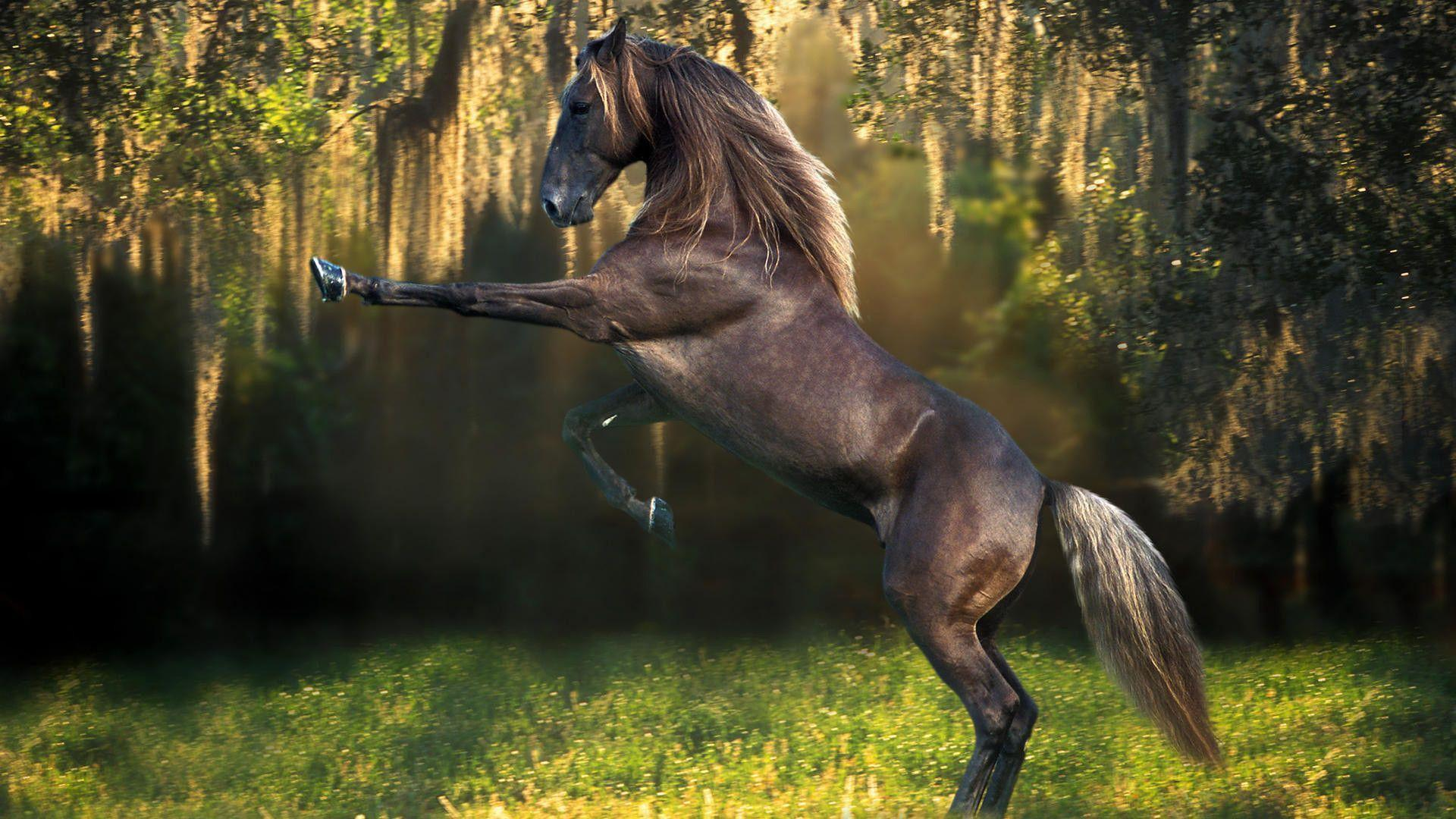 Breathtaking Funny Horse Wallpapers 1920x1080PX Wallpaper