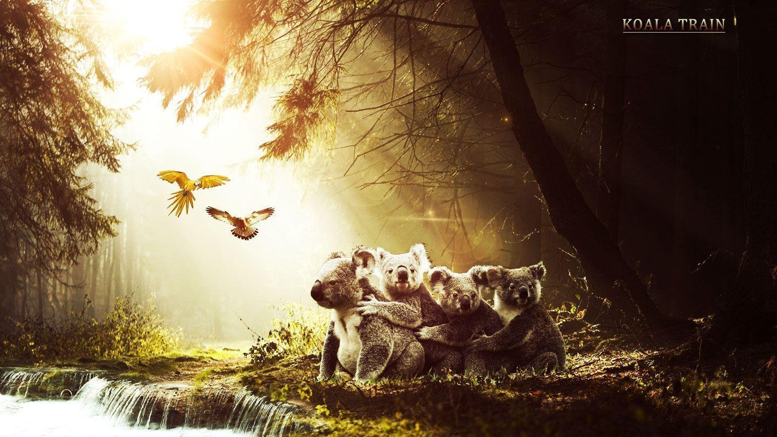 Free Wallpapers - Koalas In Forest 1600x900 wallpaper