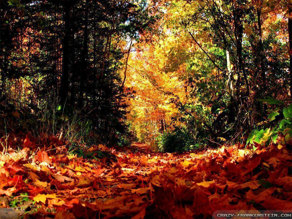 Fall Season Backgrounds