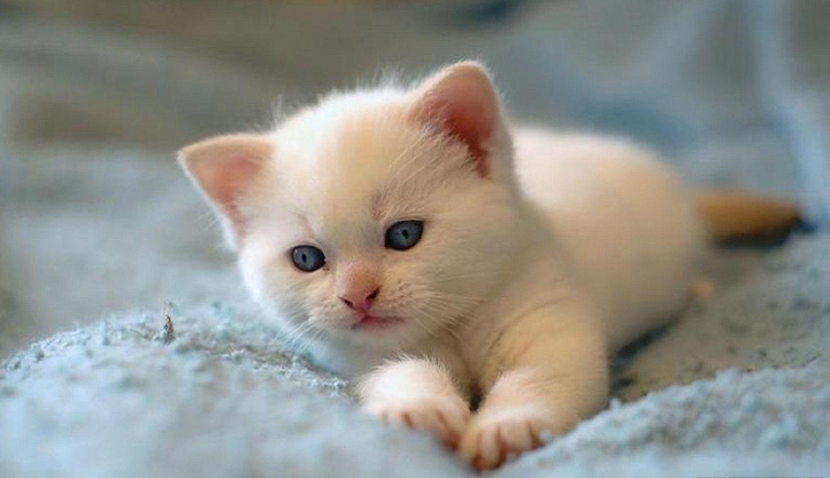 cute cat wallpapers - wallpaper cave