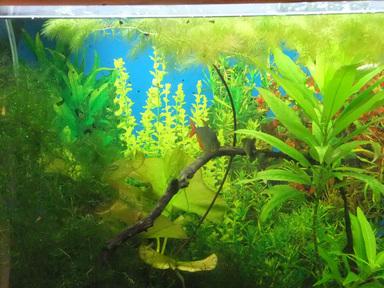 Brighten your aquarium background (Seaview) | A Practical ...