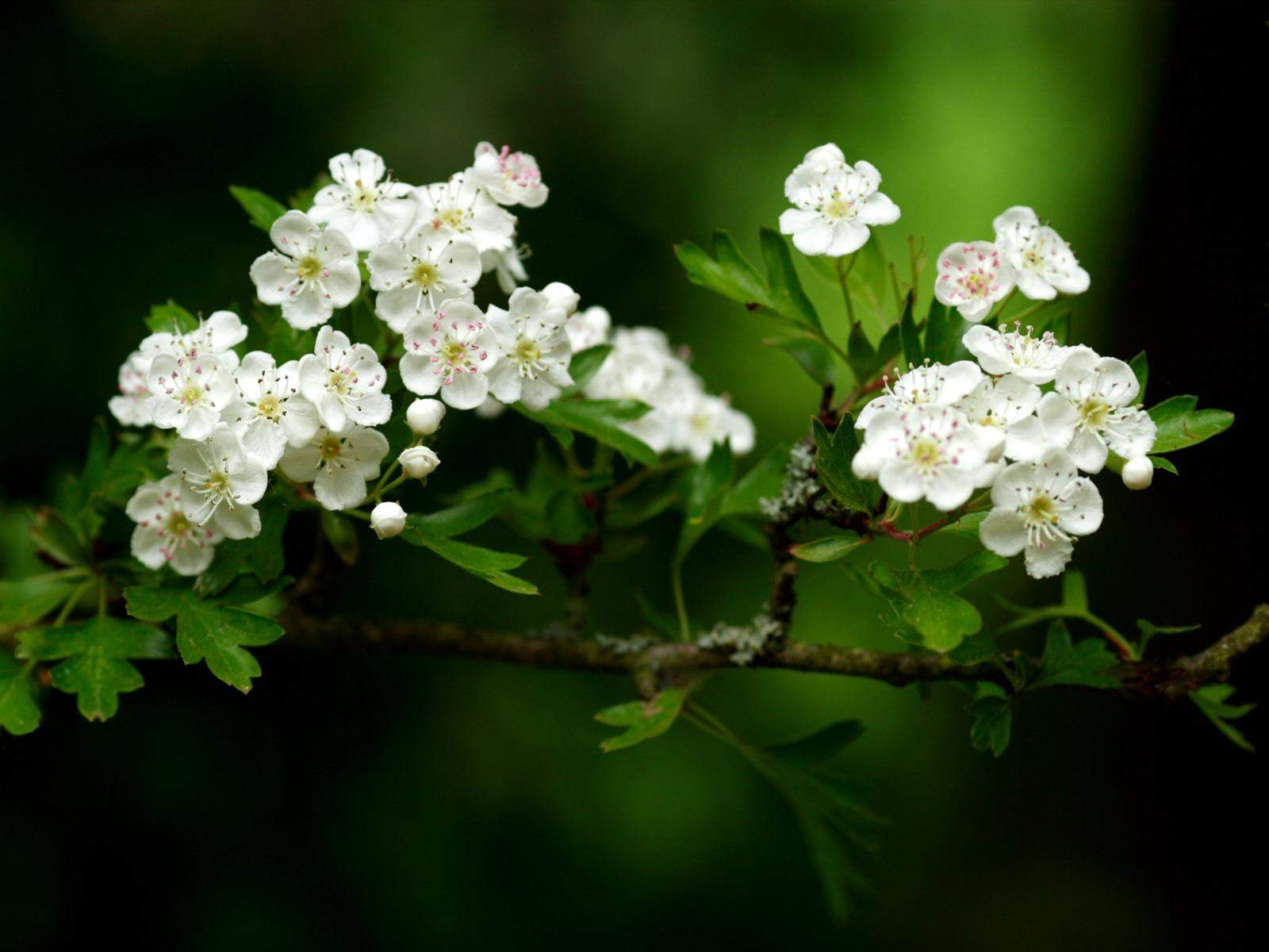 Beautiful flowers wallpapers wallpaper cave beautiful small white flowers wallpapers izmirmasajfo
