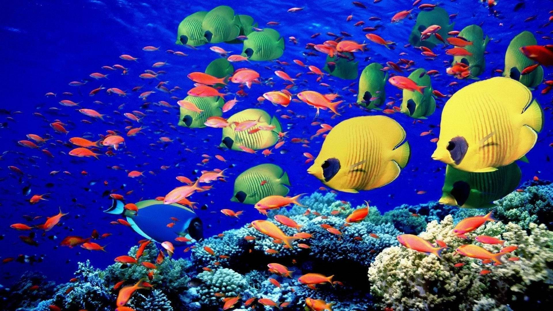 Animals fishes underwater swim coral reef colors bright sea life ...