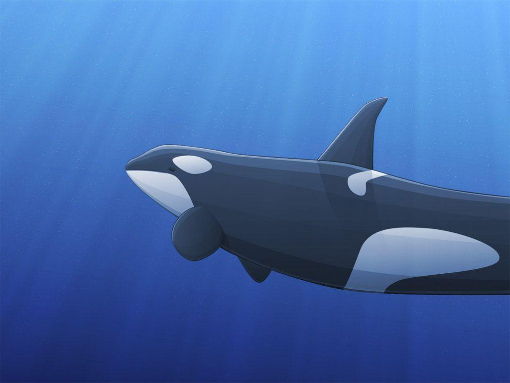 Wallpaper Collections: orca