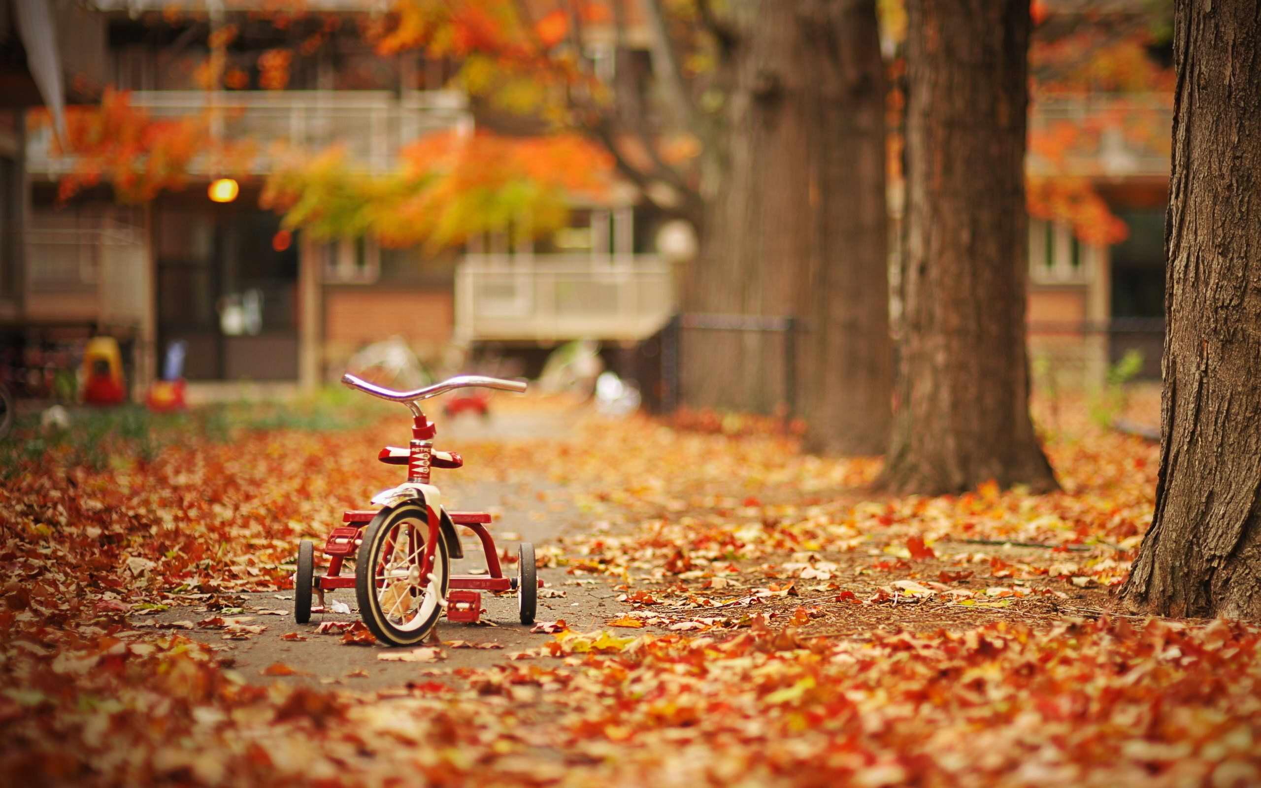 Fall Season Wallpaper Hd Background Desktop