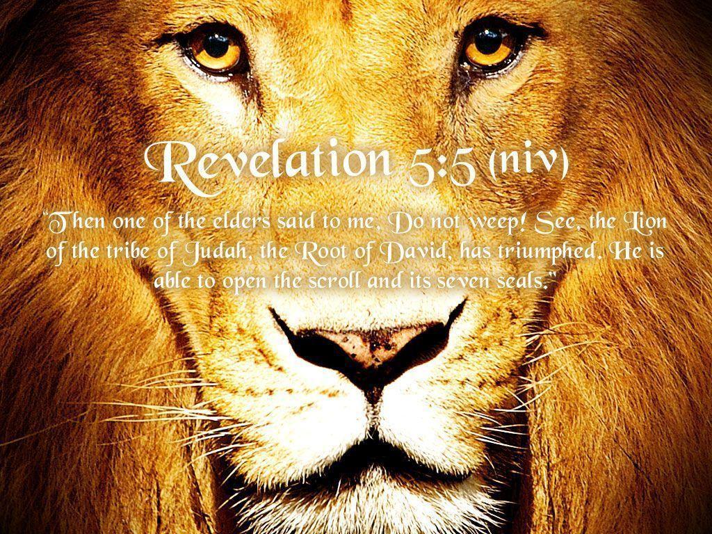 Lion Of Judah Wallpapers Wallpaper Cave