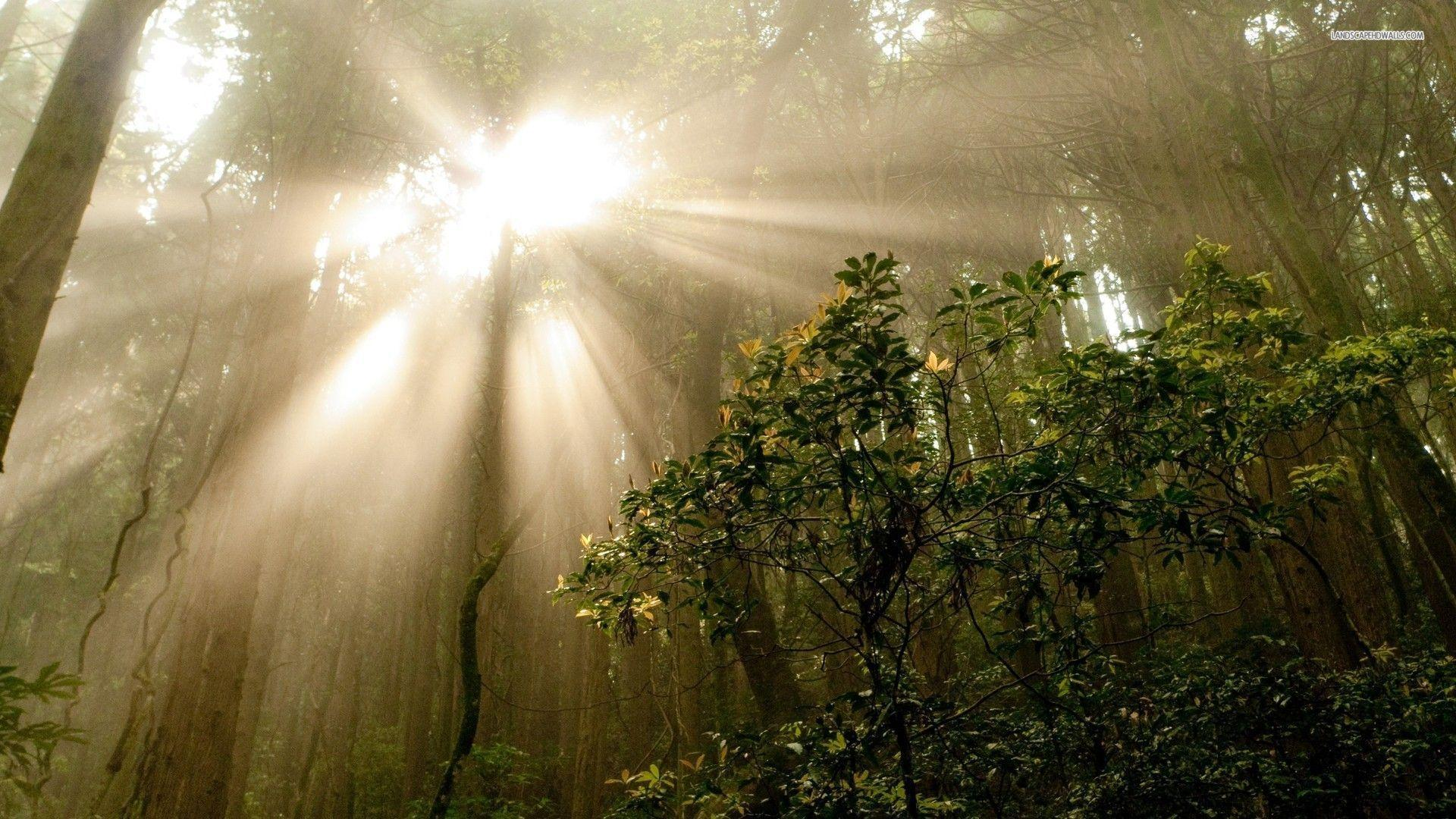 Sun through the Trees in the Jungle wallpapers #