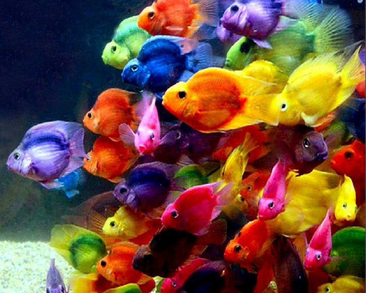 Fish Wallpapers - Wallpaper Cave