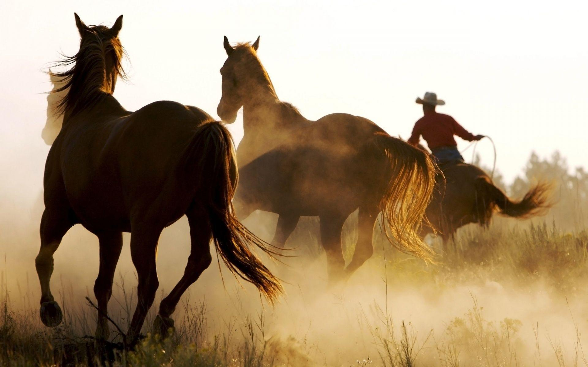 Wild Horses Wallpapers Wallpaper
