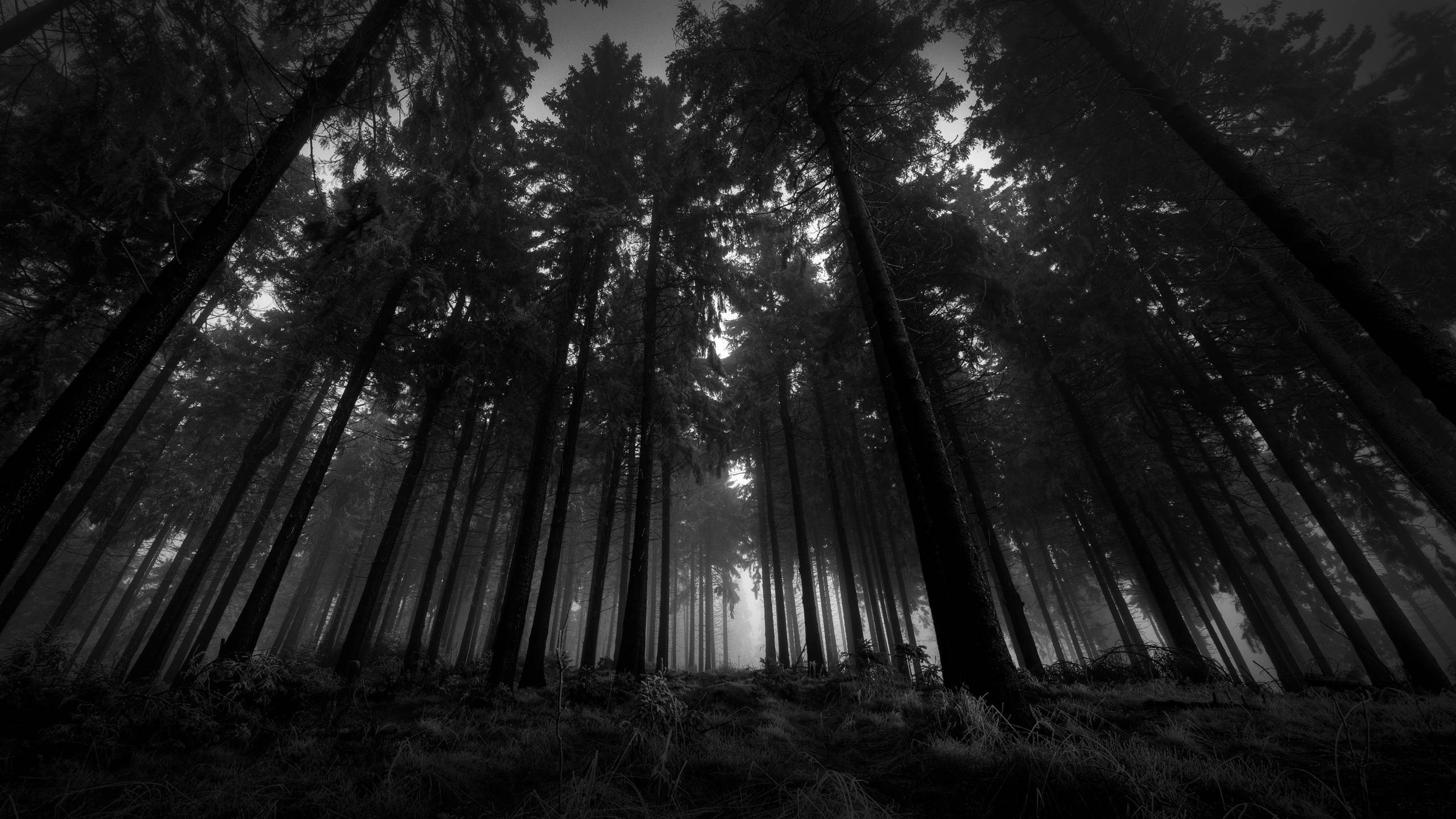dark forest backgrounds wallpaper cave