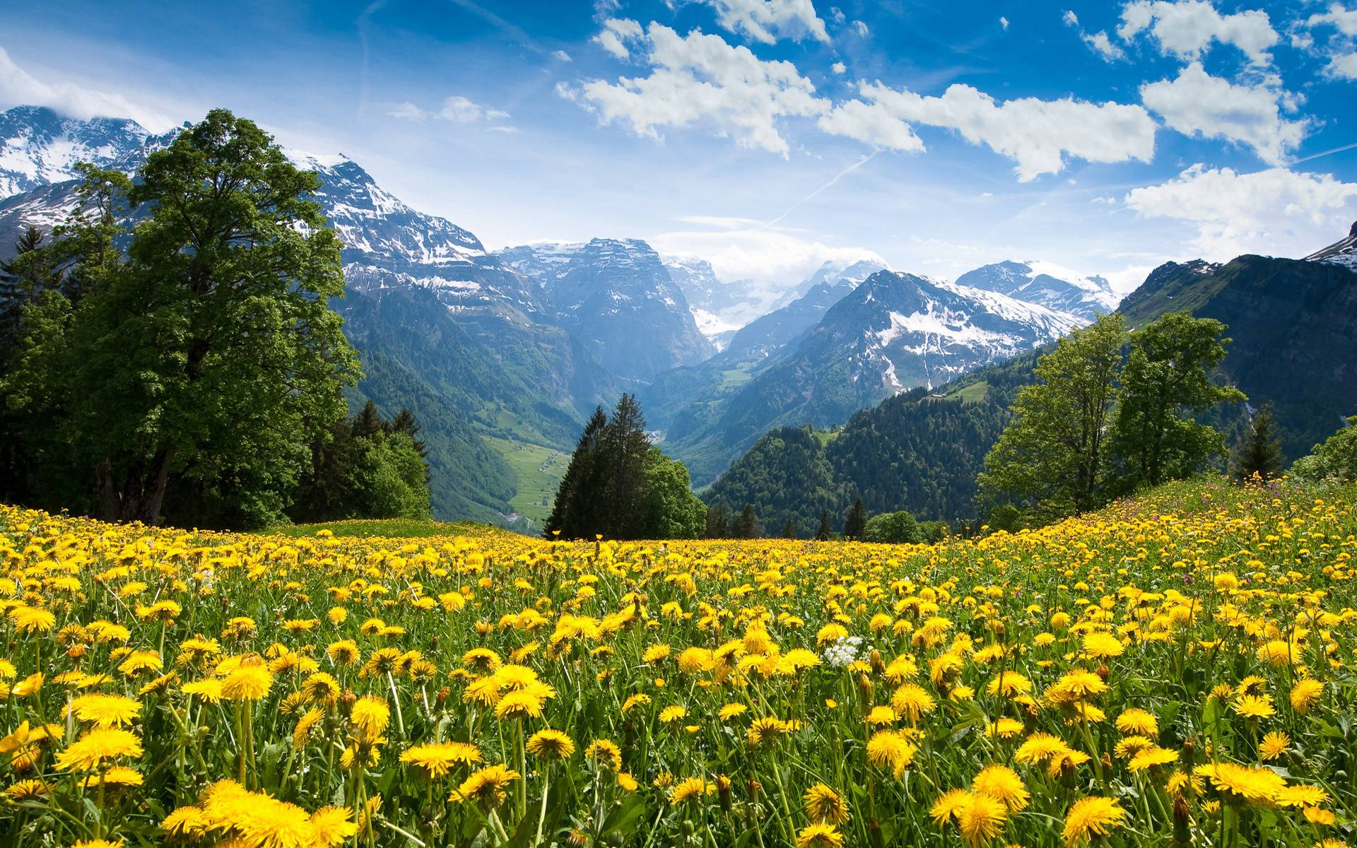 Scene 2014 of Alps Mountain See Both Summer / Wallpapers Summer