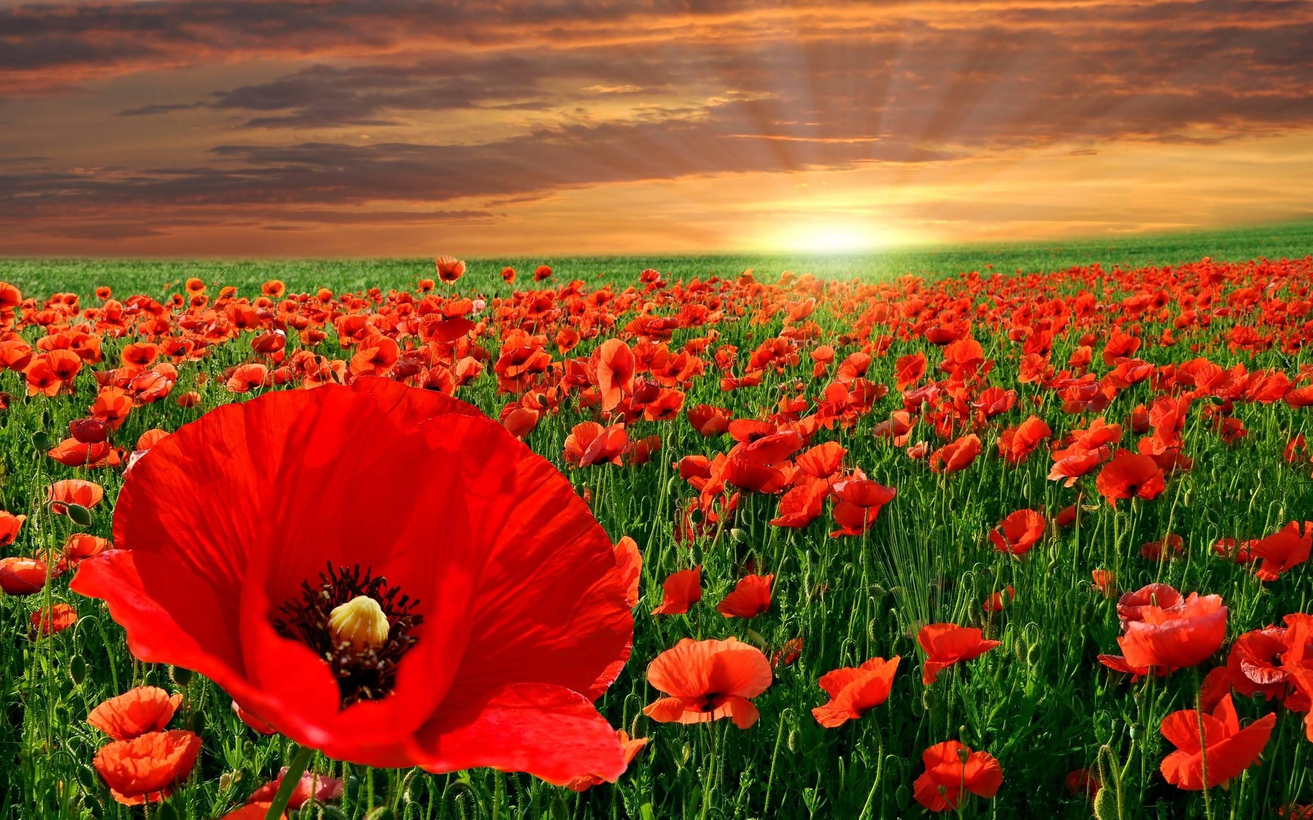 Celtic Flowers HD desktop wallpaper : Widescreen : High Definition ...