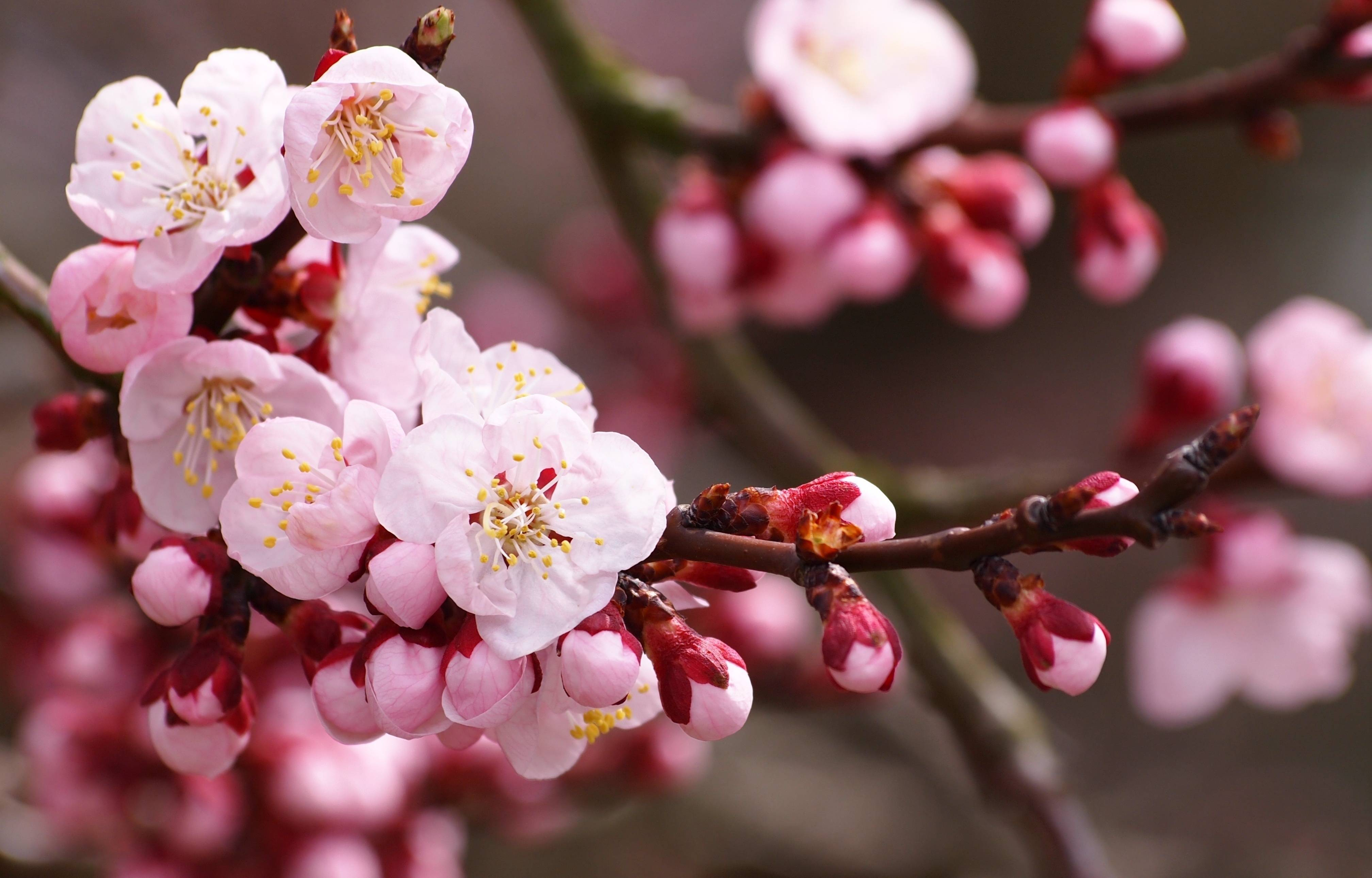 Wallpaper nature beauty pink | wallpapersadda.