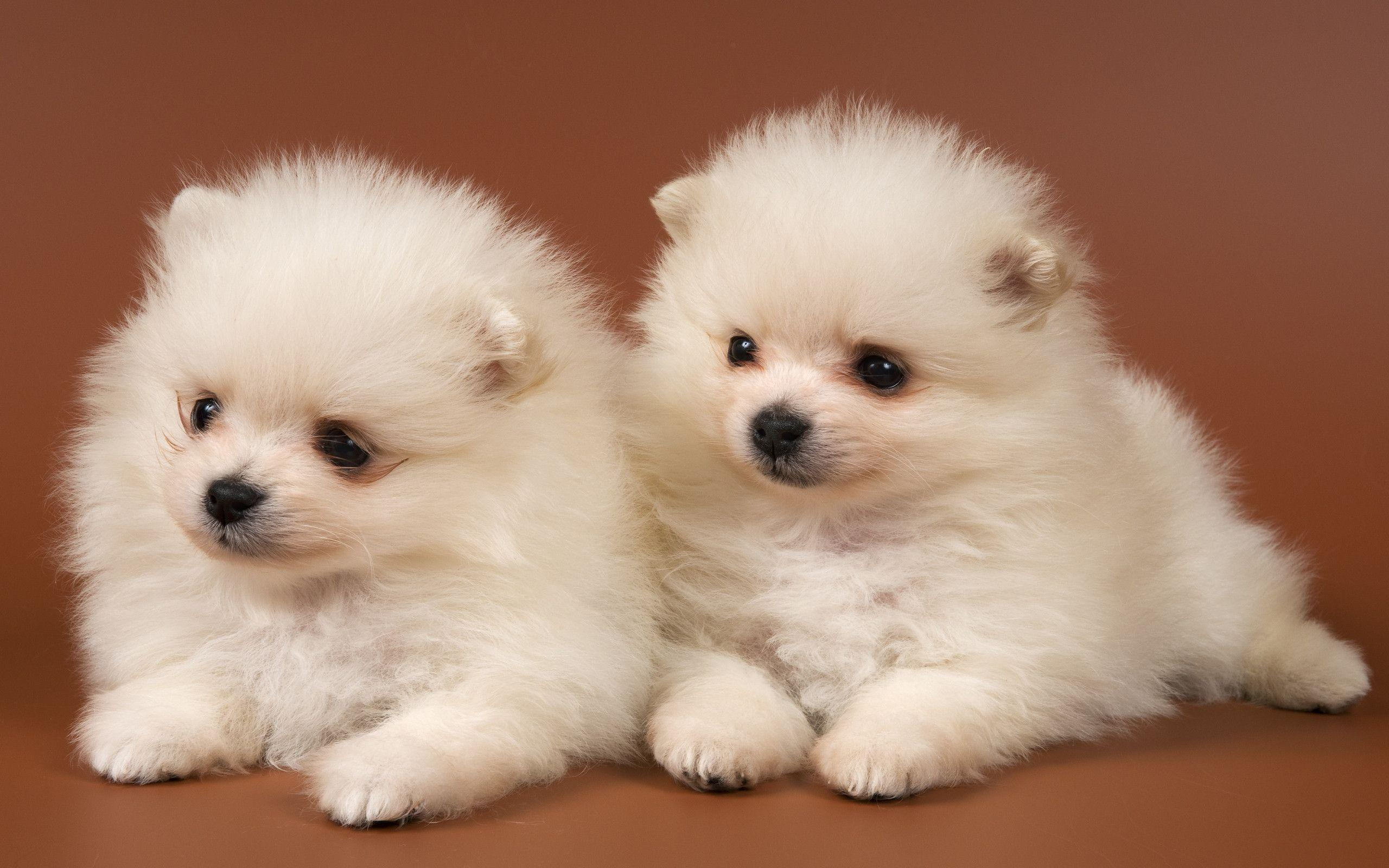 Baby Dog Wallpapers - Wallpaper Cave