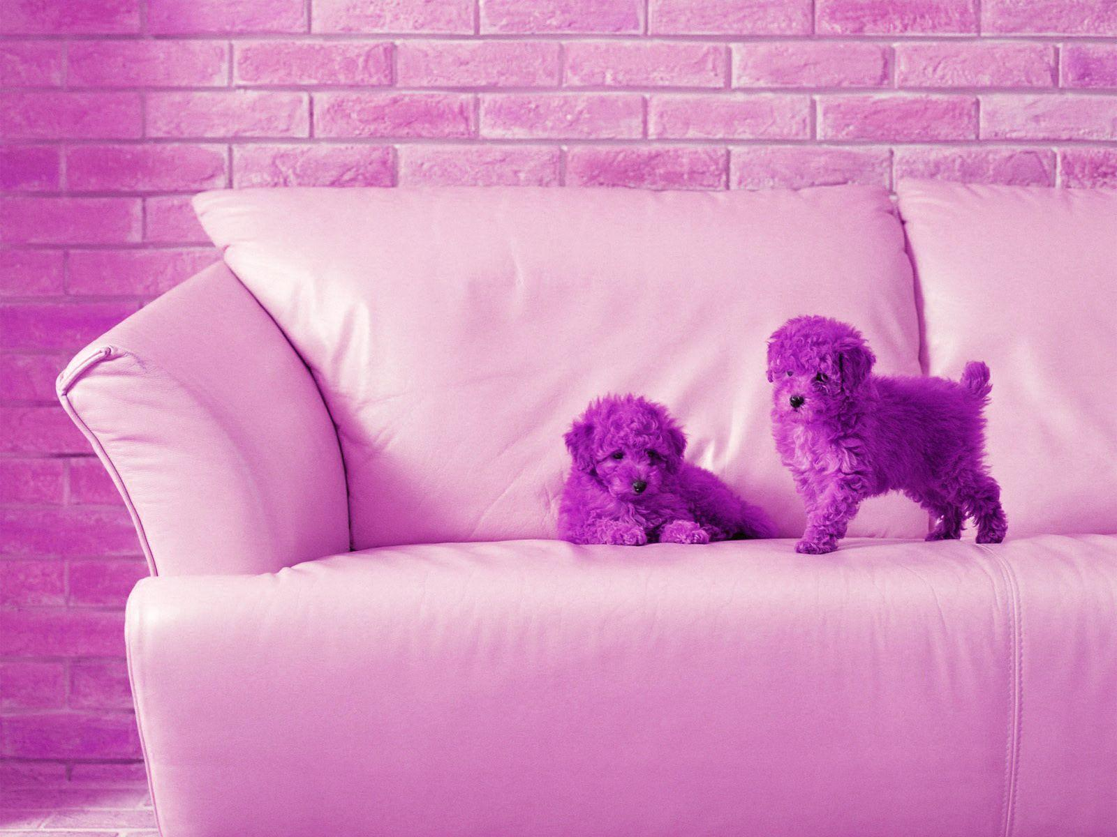Cute wallpapers for computer wallpaper cave - Cute wallpapers ...