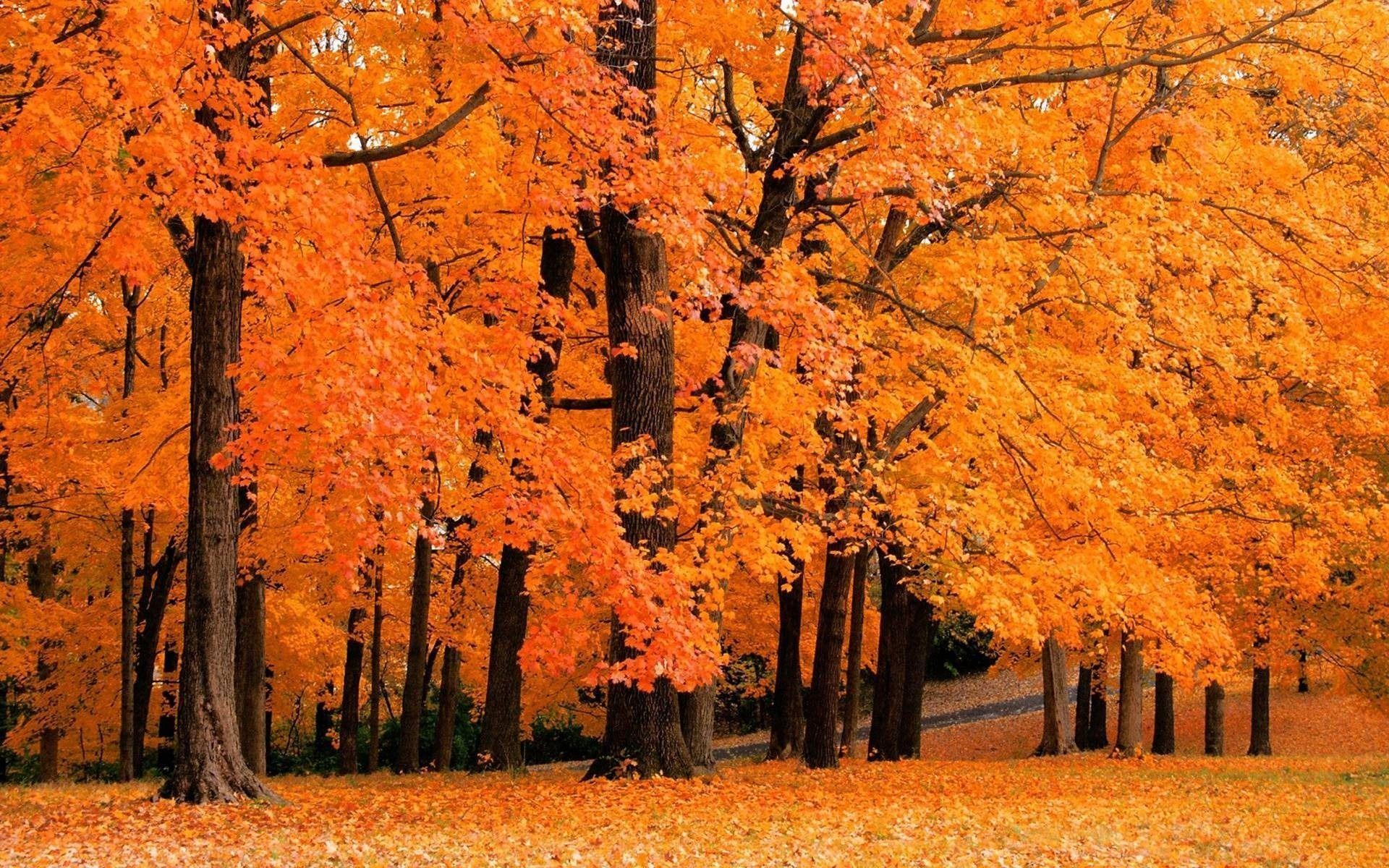 Free Autumn Screensavers Wallpapers Wallpaper Cave