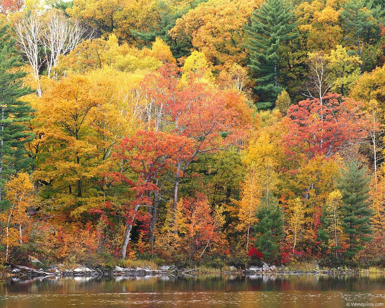 Fall Colors Desktop Wallpaper