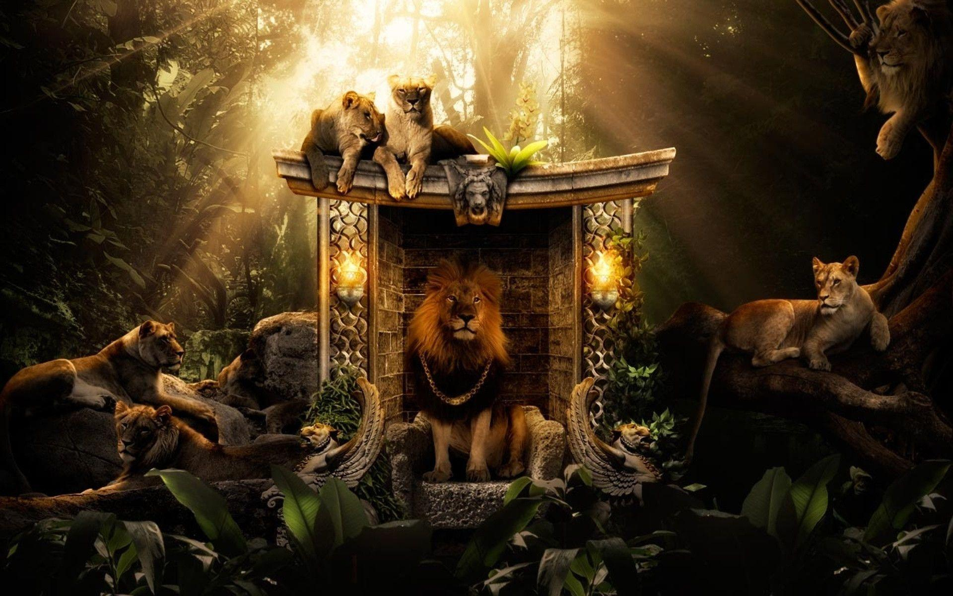 Lions Jungle Wallpapers