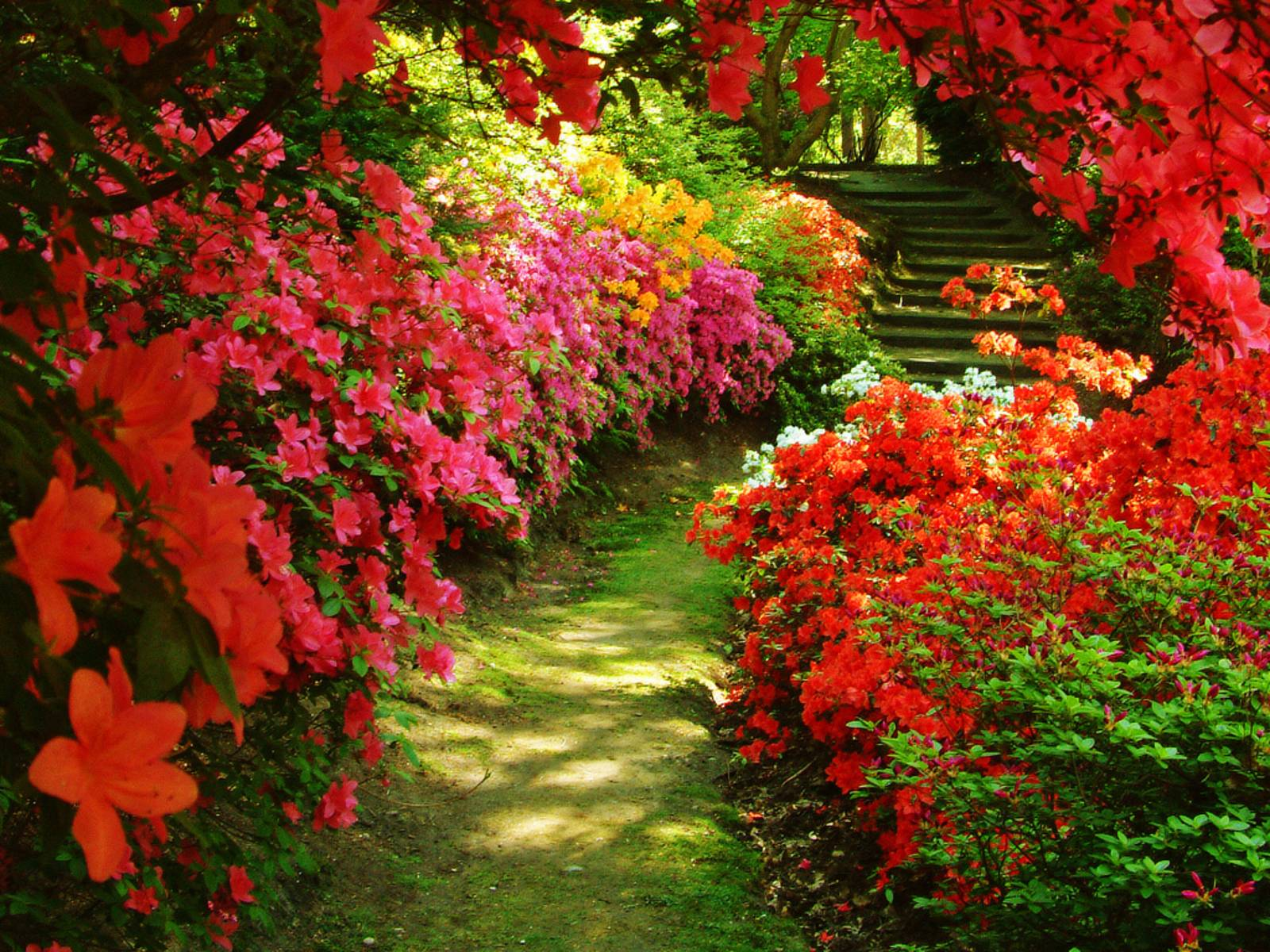 images for beautiful flower garden background - Garden Flowers Wallpaper