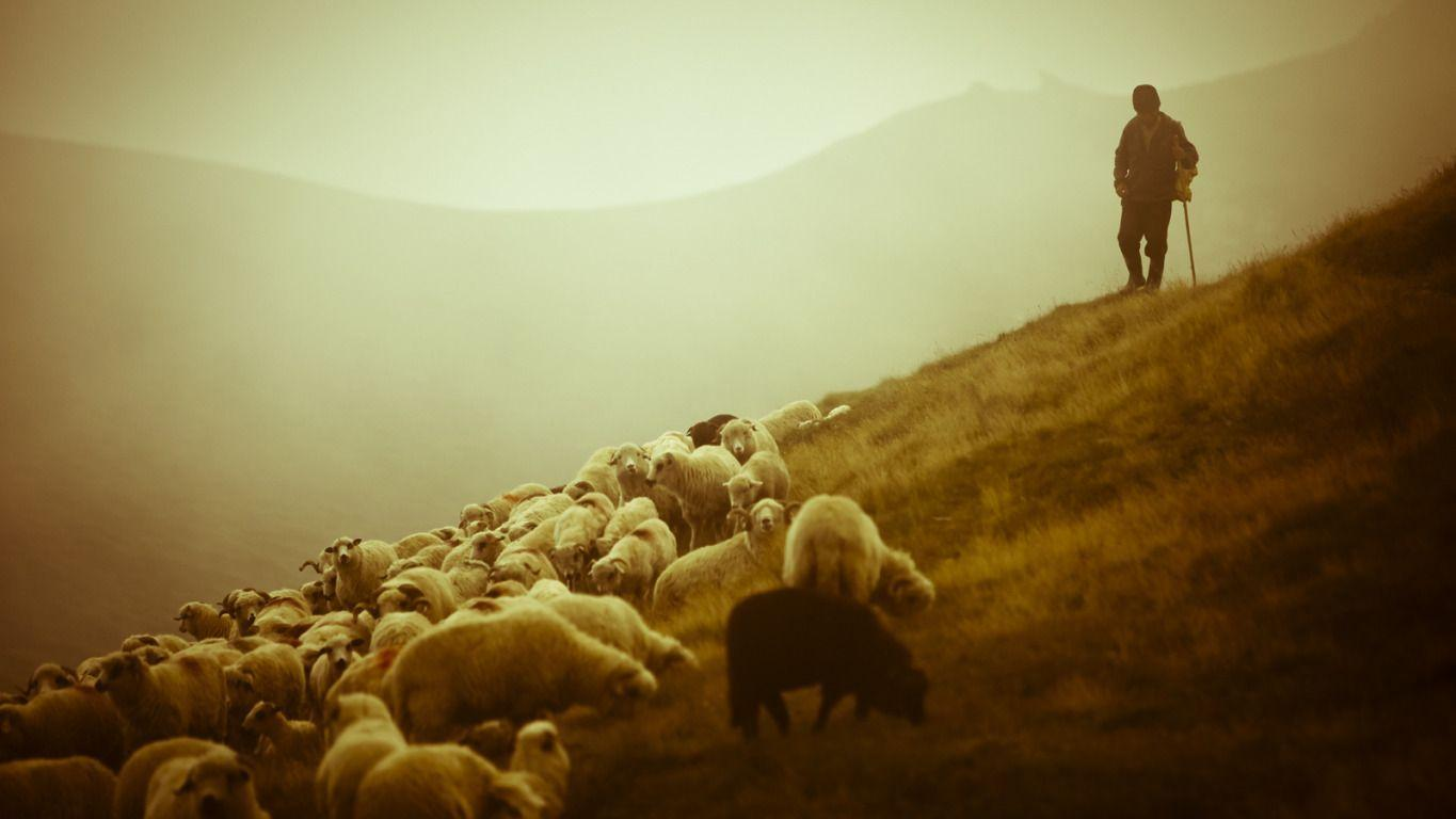 Sheep and Shepard – Romania widescreen wallpapers