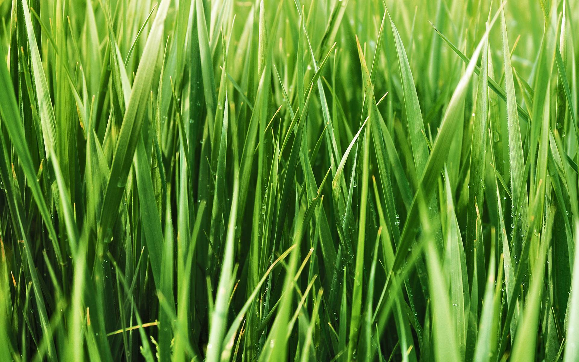 Grass Blades Background Gratis Penselen - (2.828 Gratis ...