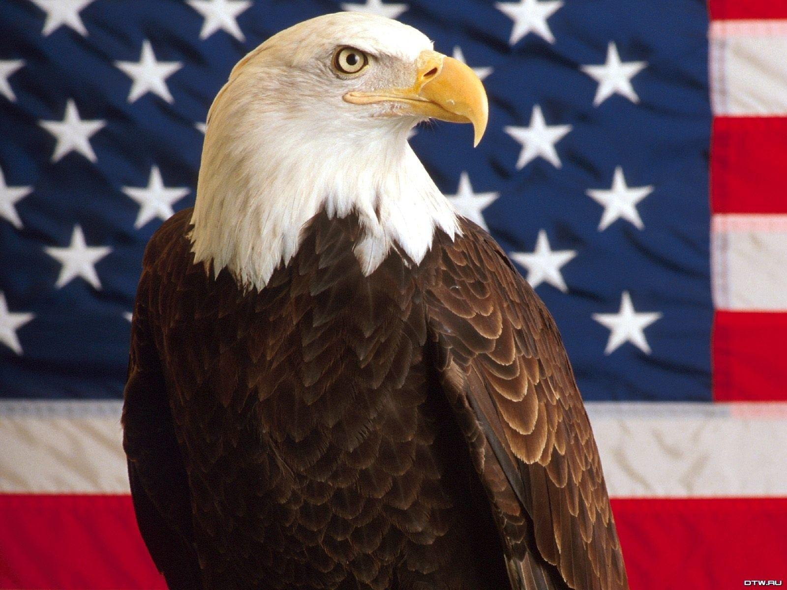 American Bald Eagle Wallpapers Wallpaper Cave