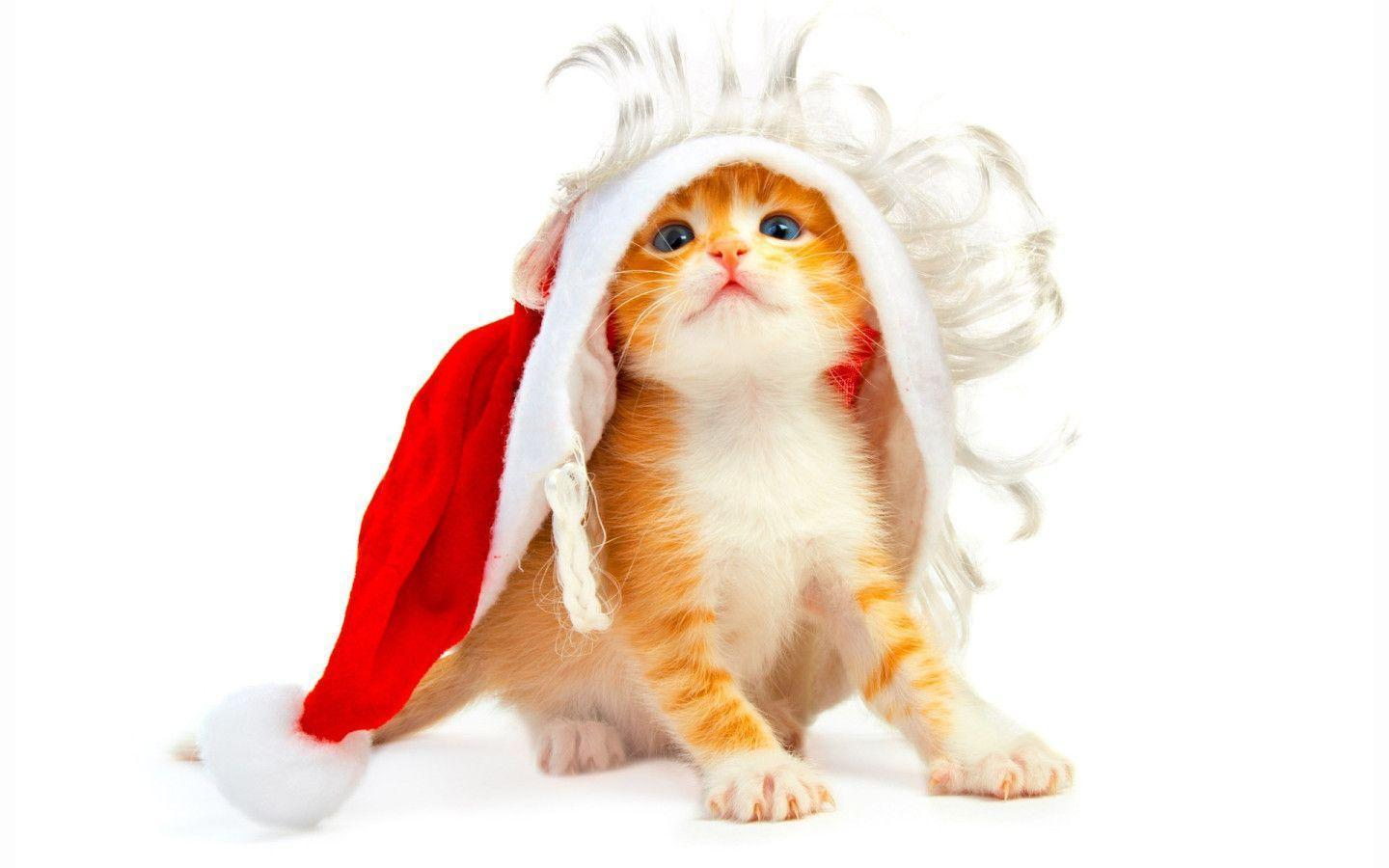 Xmas Stuff For > Cute Christmas Kitten Wallpaper