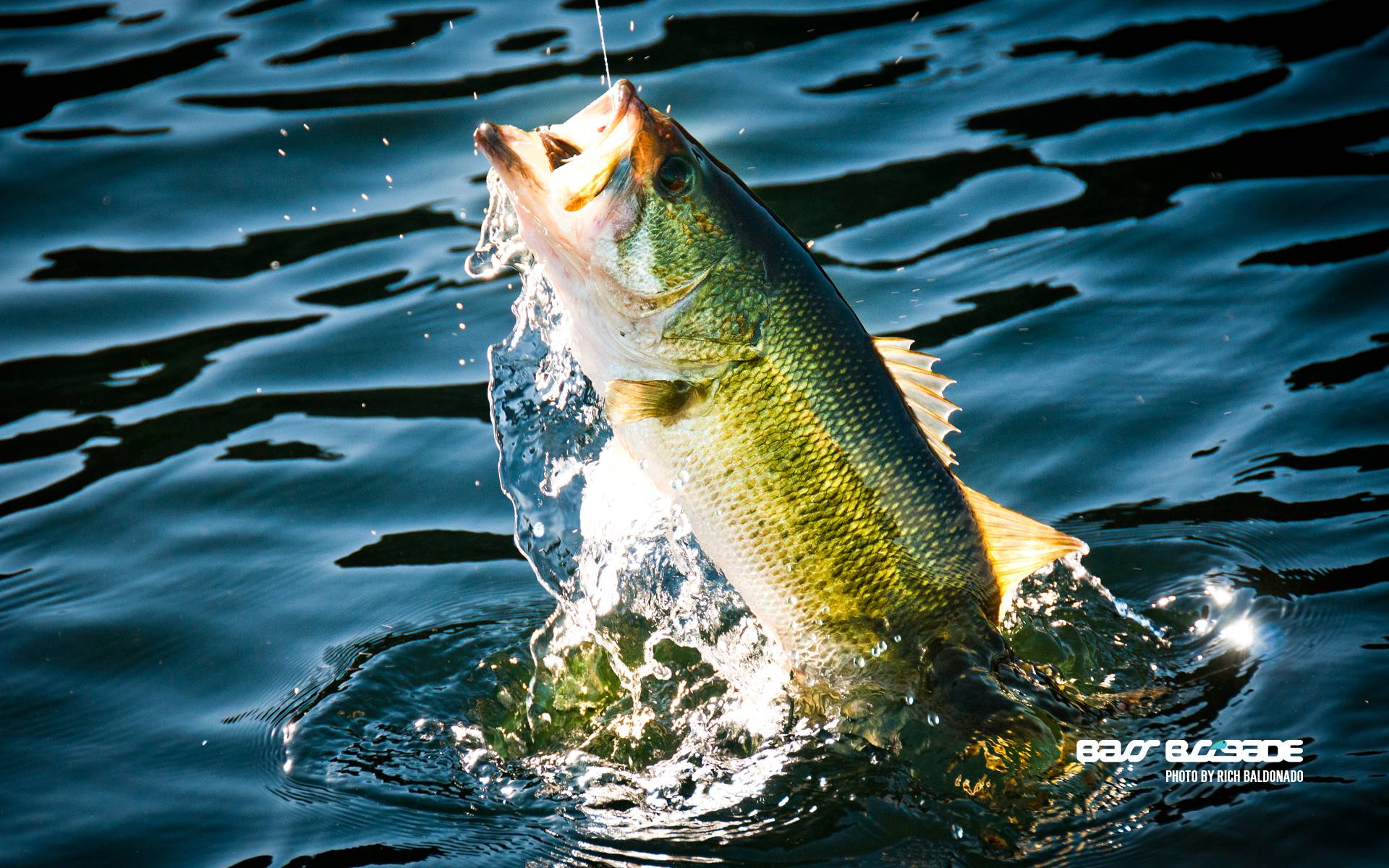 bass fishing pc wallpaper -#main
