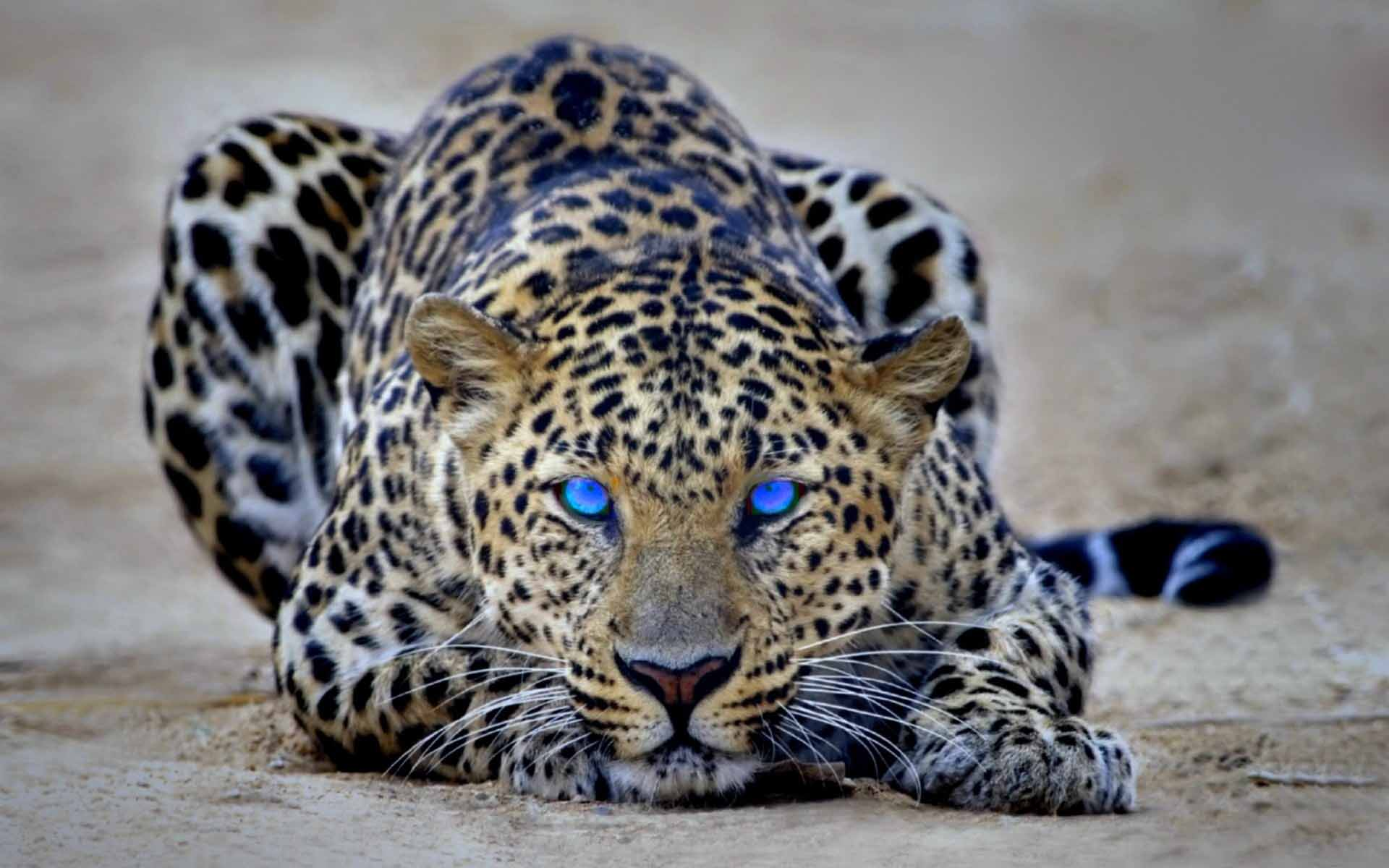 Animals Backgrounds, 690768 Baby Cheetah Wallpapers, by Nikolas ...