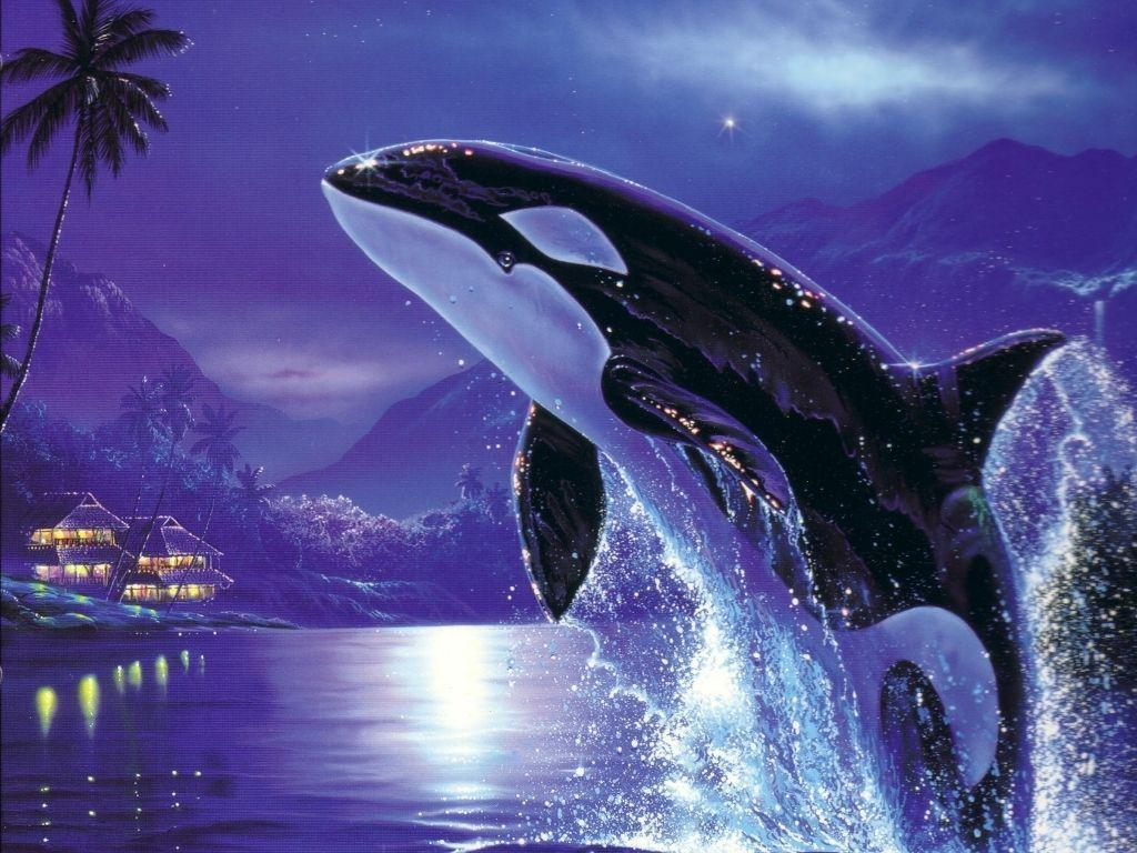 Orca desktop wallpaper - Animal Backgrounds