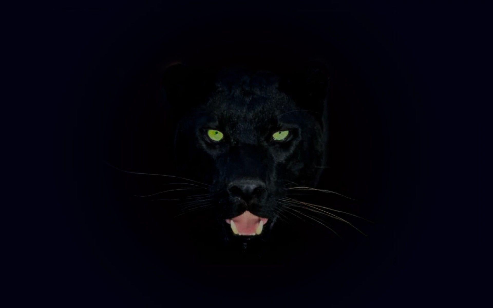 Wallpapers For Black Jaguar Wallpaper