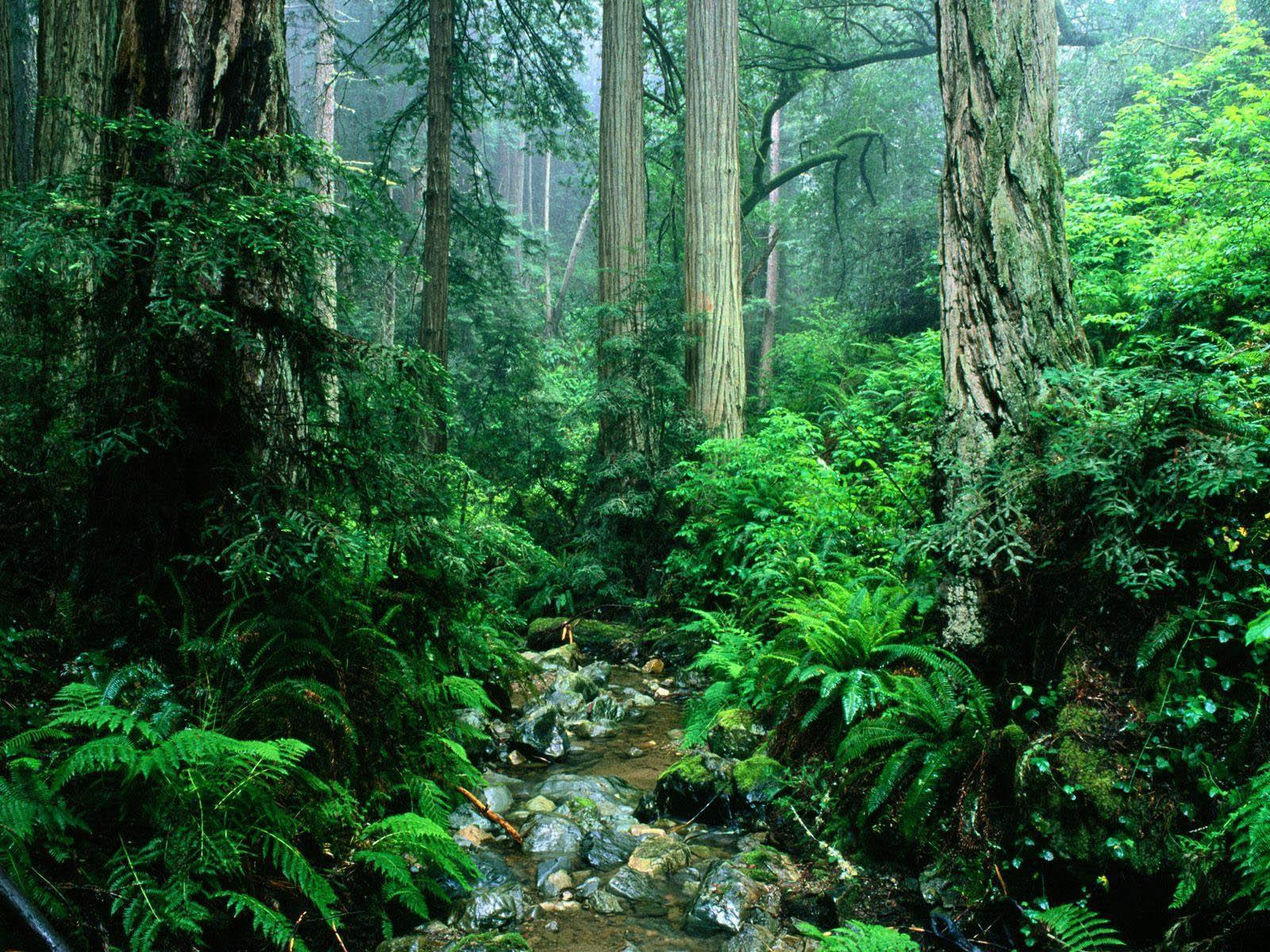 Image For > Amazon Rainforest Wallpapers Hd