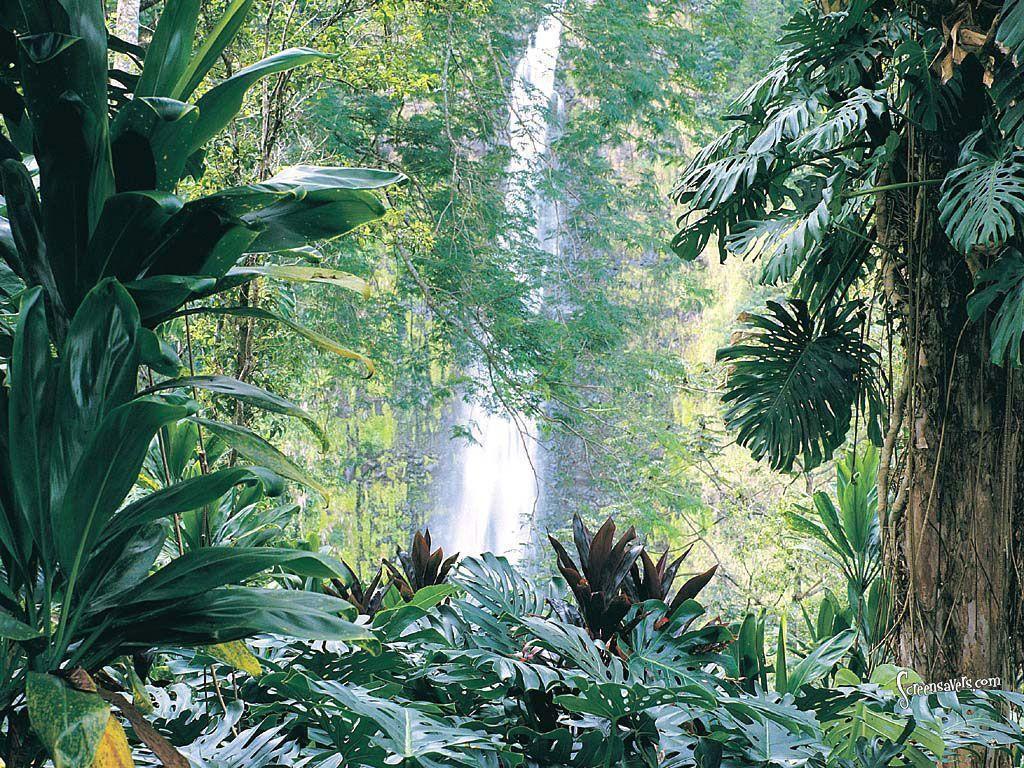 tropical jungle wallpaper - photo #12