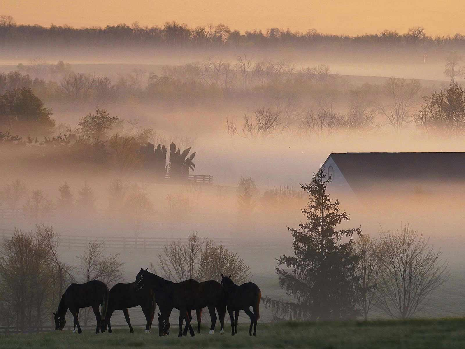 desktop wallpaper a· gallery a· travels a· foggy horse farm free
