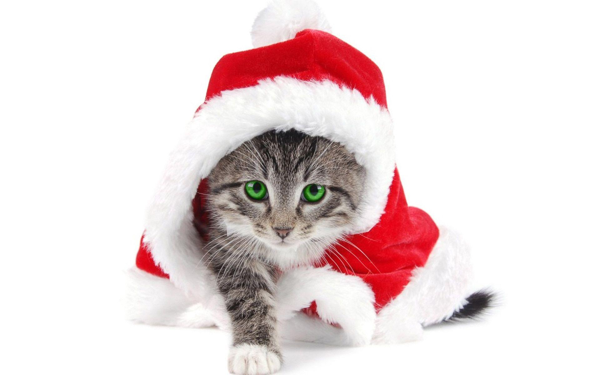 Xmas Stuff For > Christmas Kitten