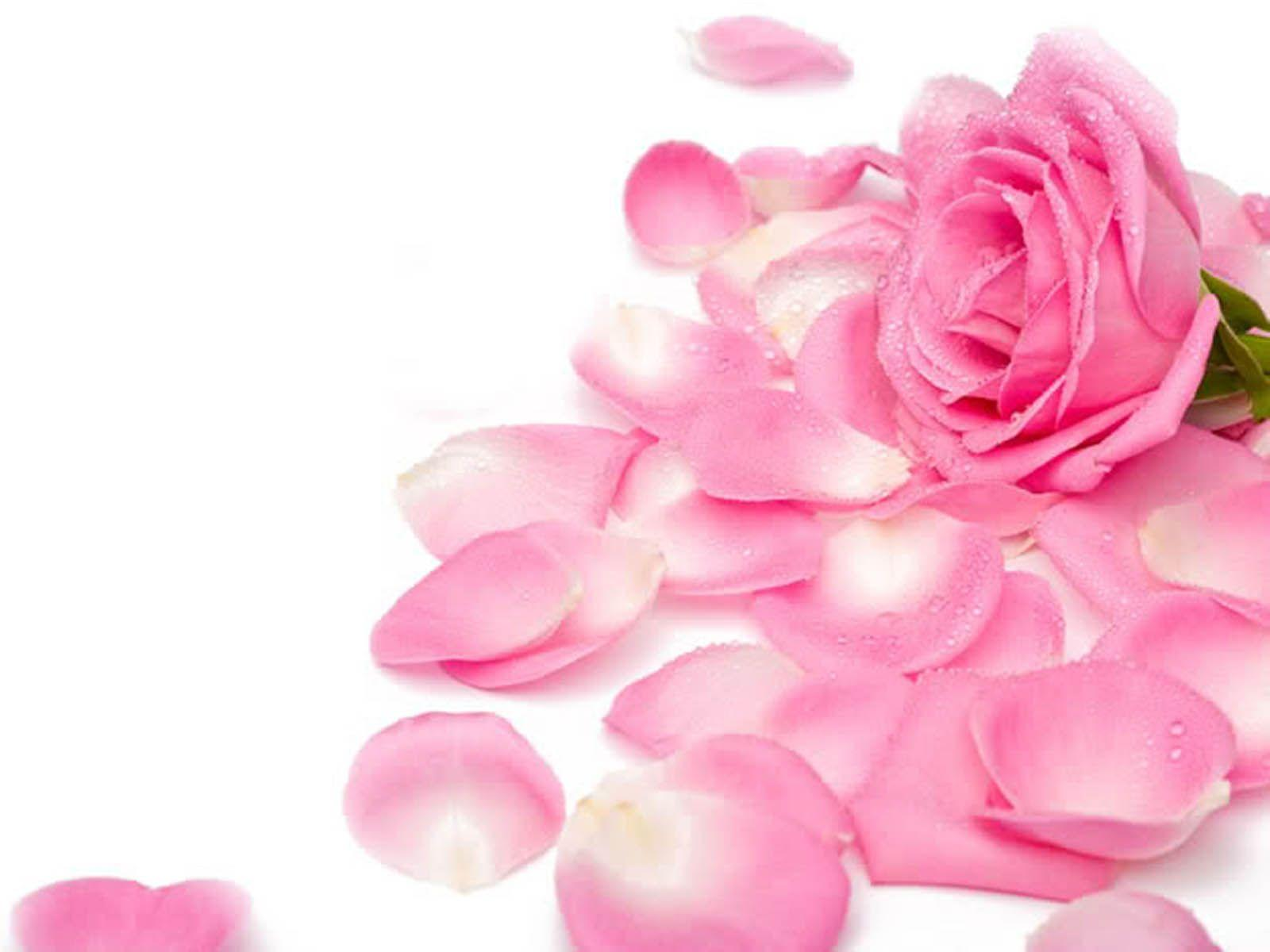 best Rainbow roses images on Pinterest
