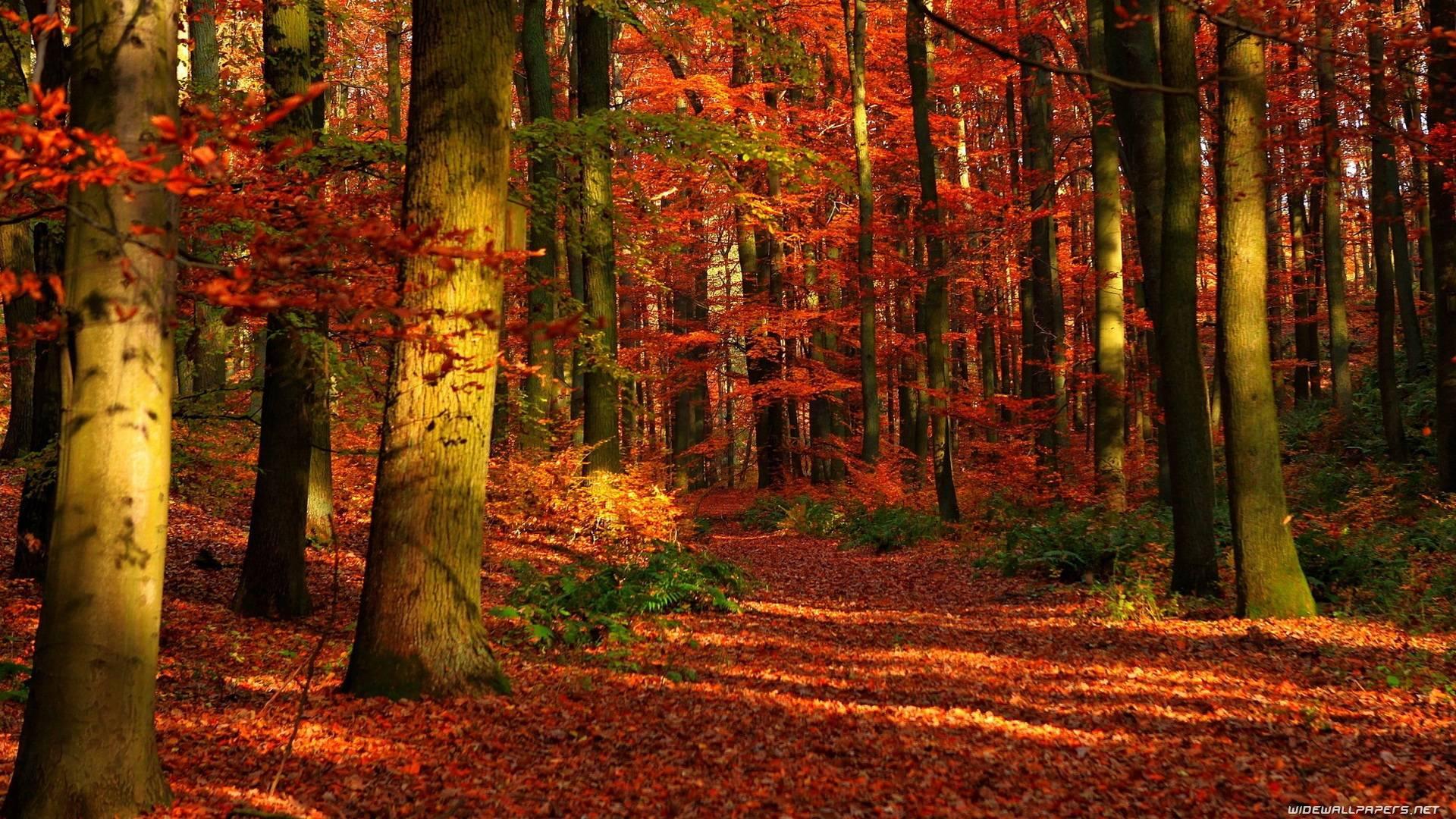 Cool And Beautiful Nature Desktop Wallpaper Image: Cool Nature Desktop Backgrounds