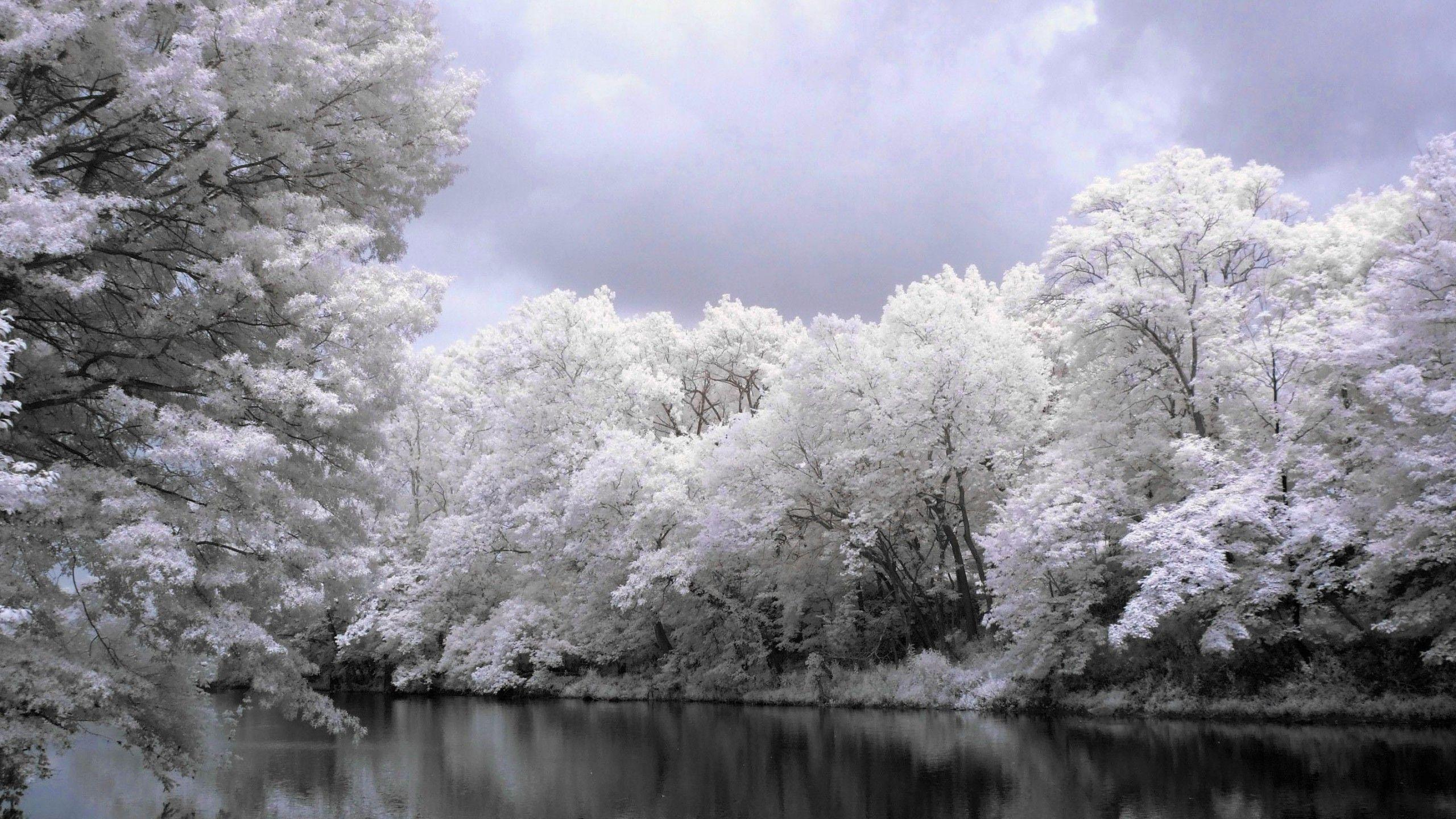 3d winter scenes wallpaper - photo #20