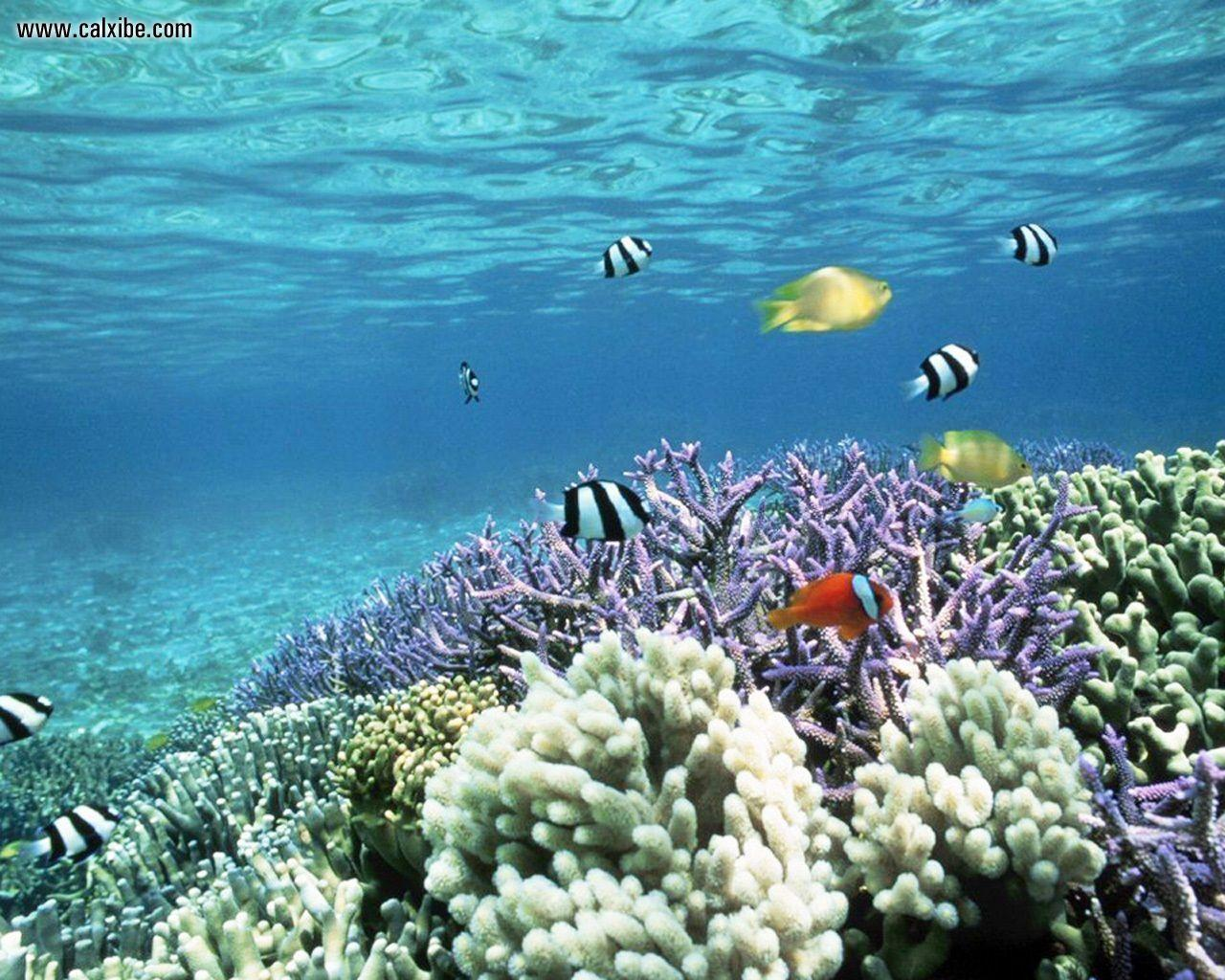 Tropical fish backgrounds wallpaper cave for Reef tropical fish