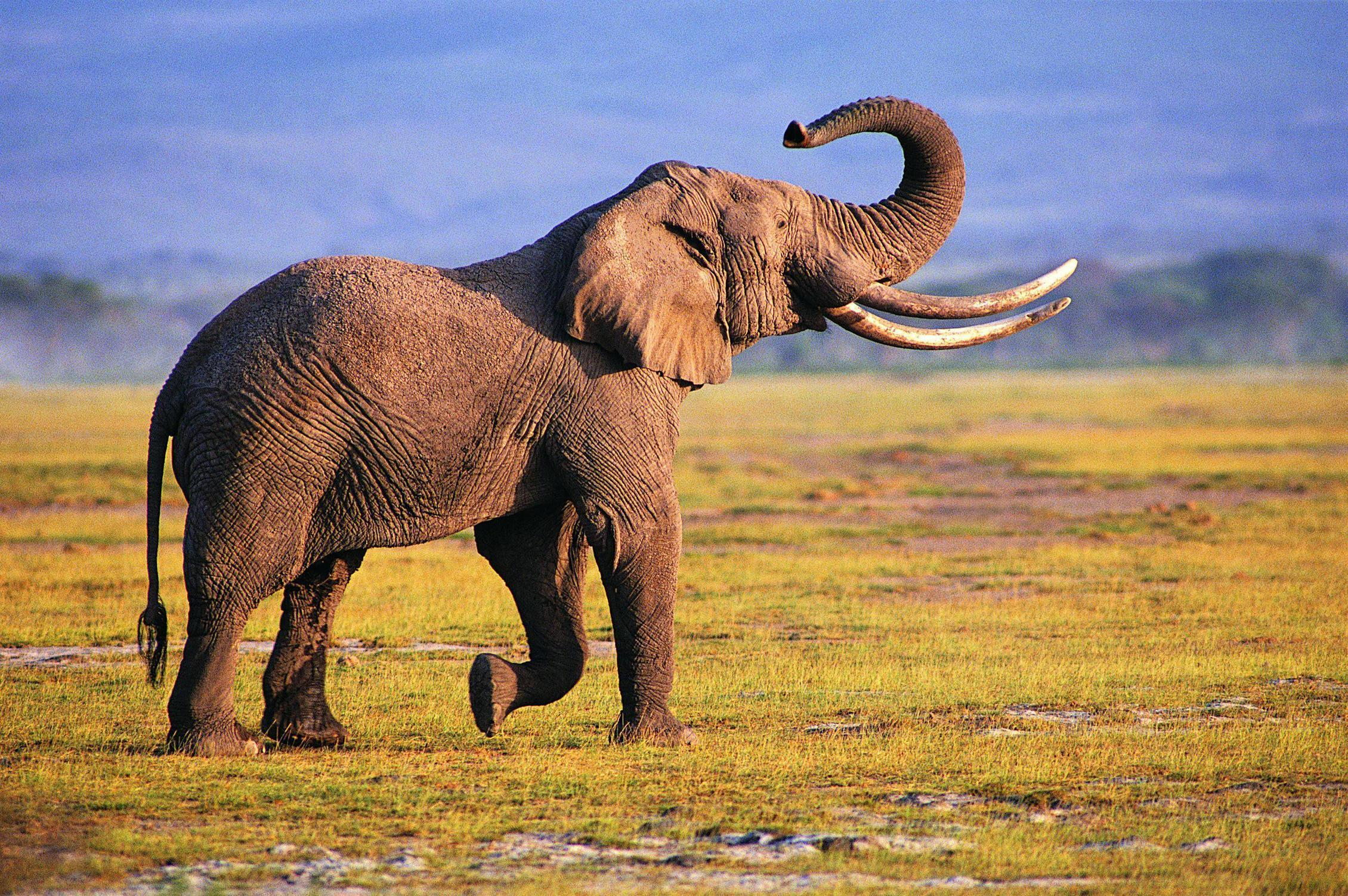 Photography Elephant Wallpapers Wallpapers