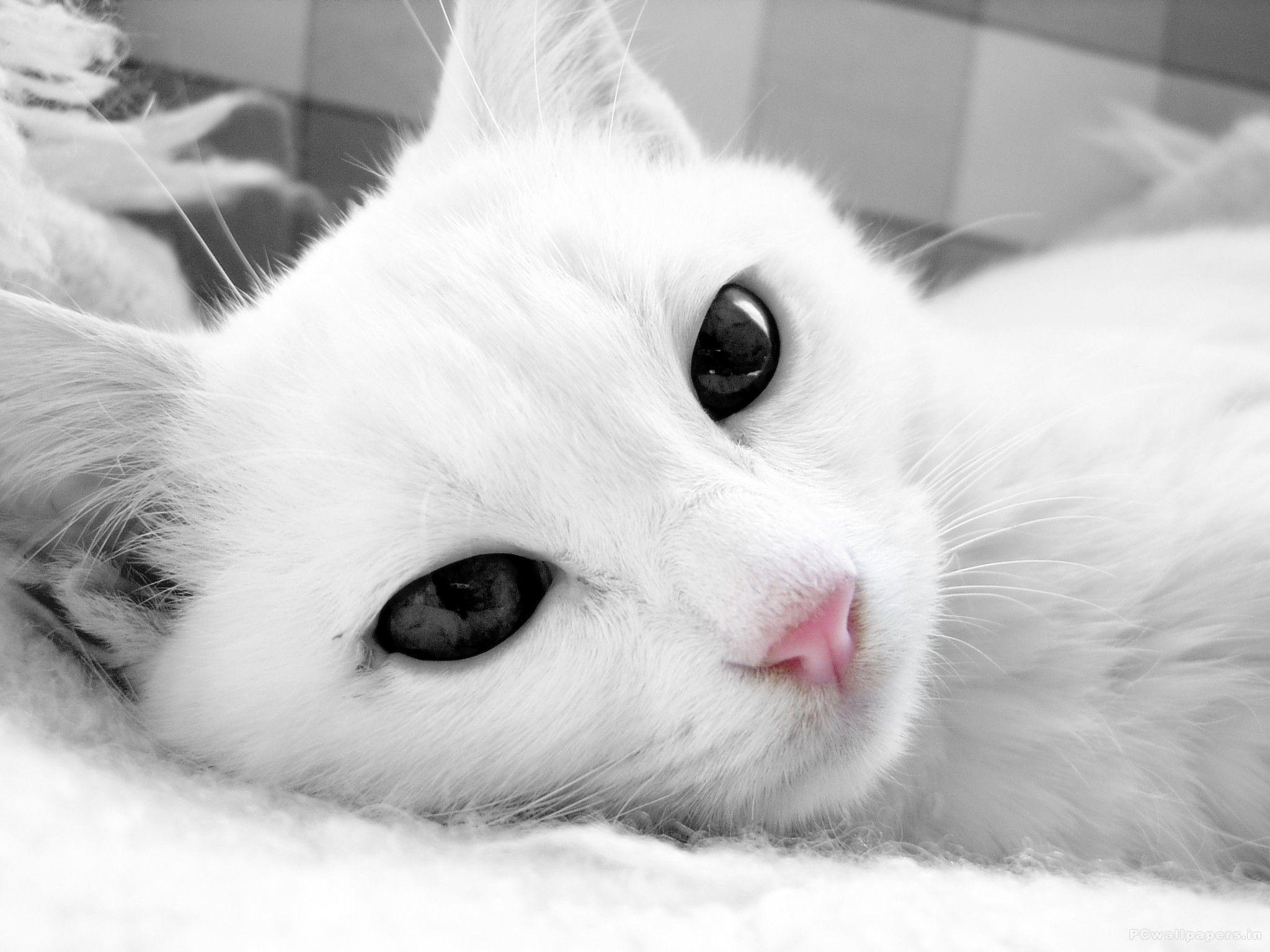 Cute Cats Hd