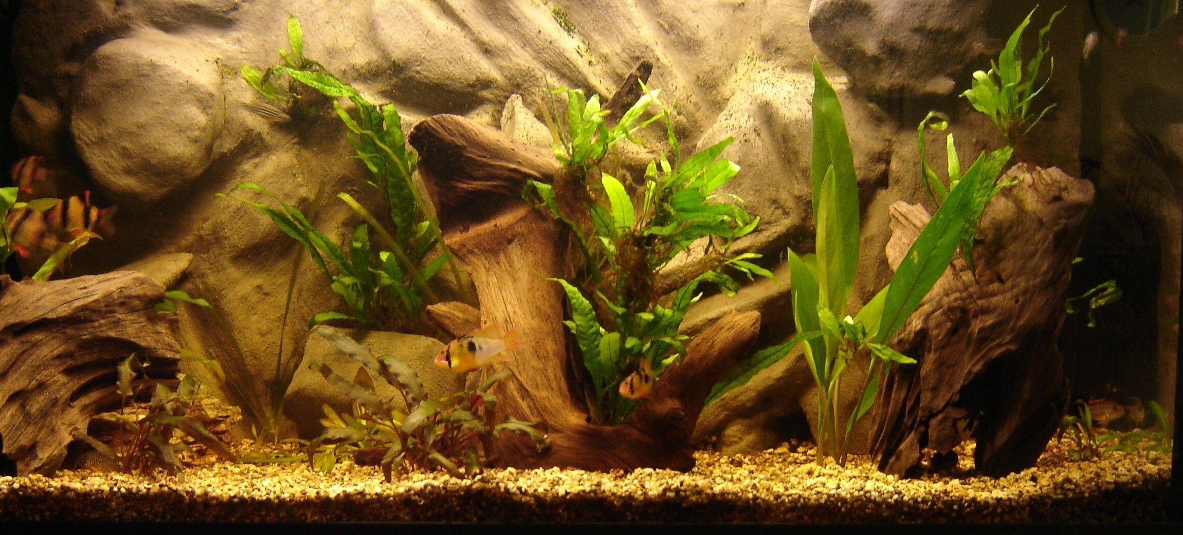 Aquarium Backgrounds 16 Desktop Background | WallFortuner.Com