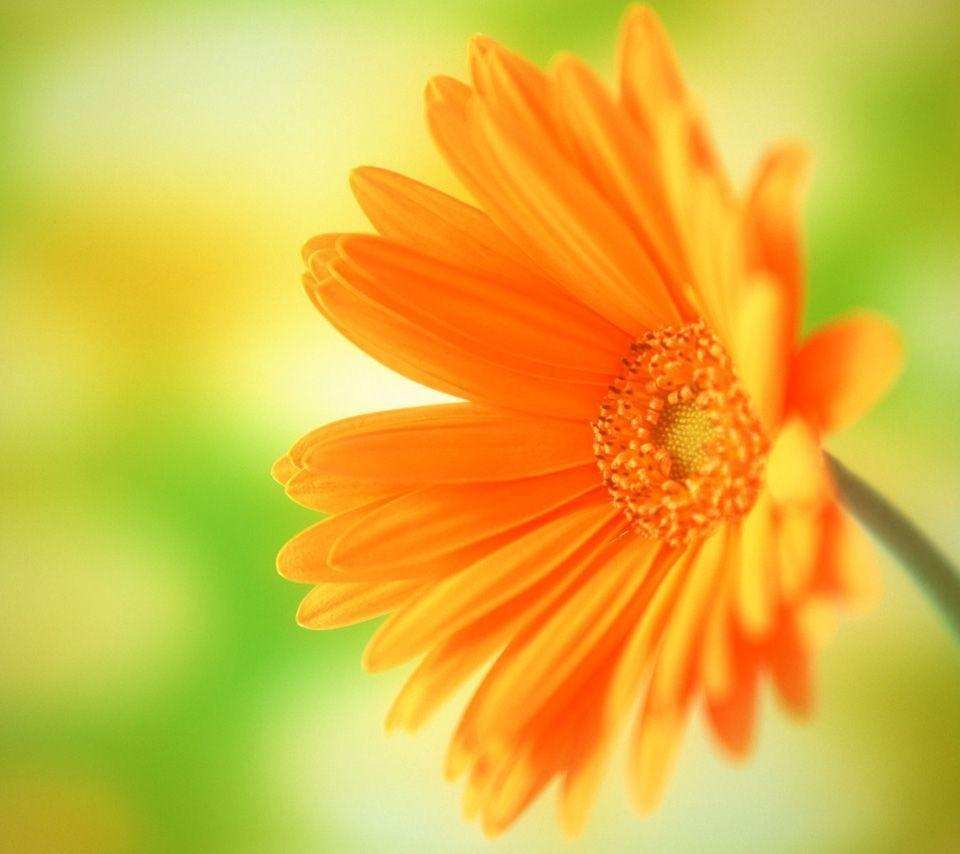 Bright Flower Wallpapers