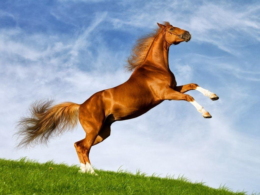 Cute horse wallpapers wallpaper cave for Window horses