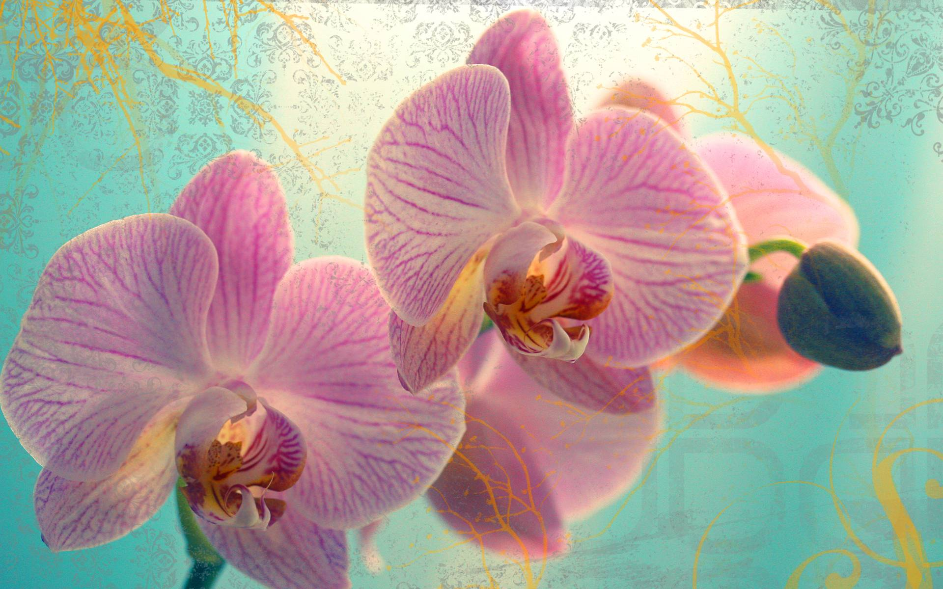 orchid wallpapers backgrounds images - photo #18