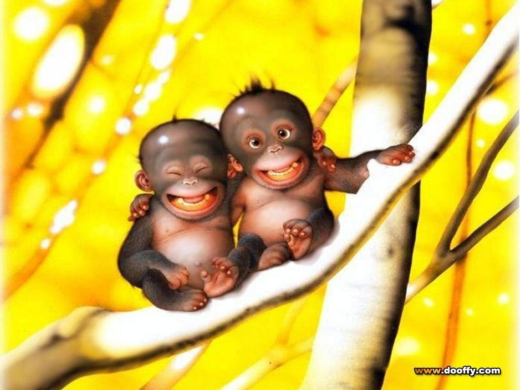 funny monkeys wallpapers - wallpaper cave