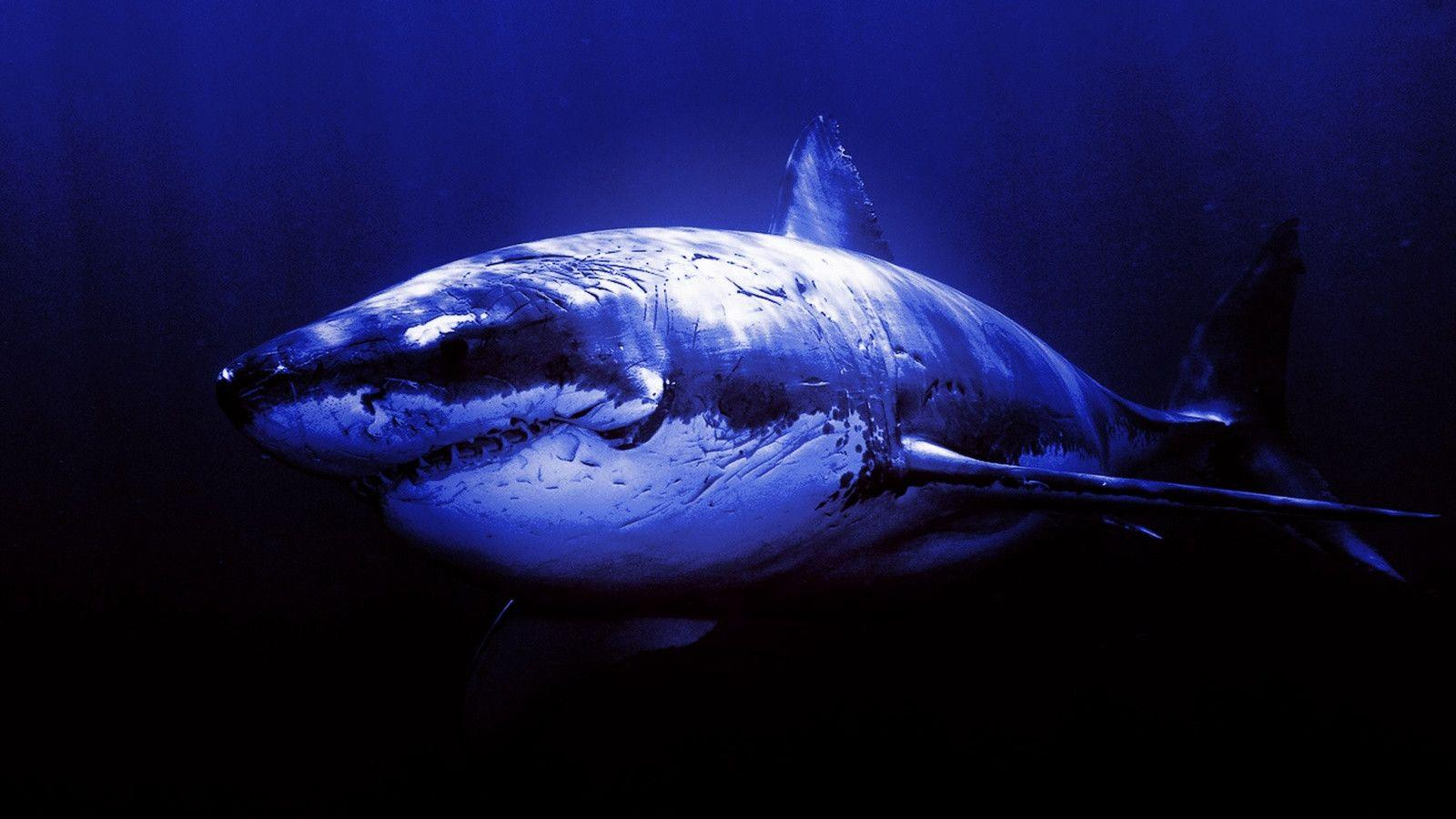 Widescreen Shark Wallpaper 03 | hdwallpapers-