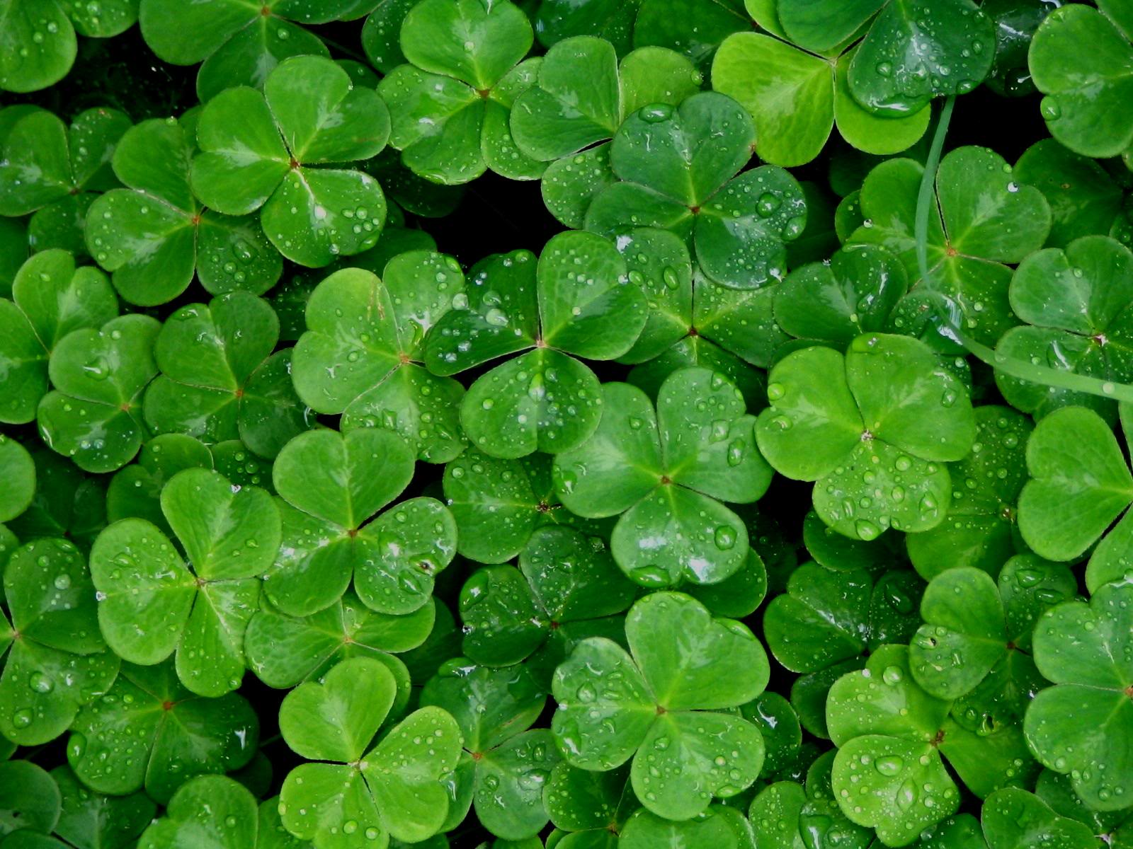 Wallpapers shamrock wallpaper cave shamrock wallpaper wallpaper shamrock wallpaper hd wallpaper voltagebd Images