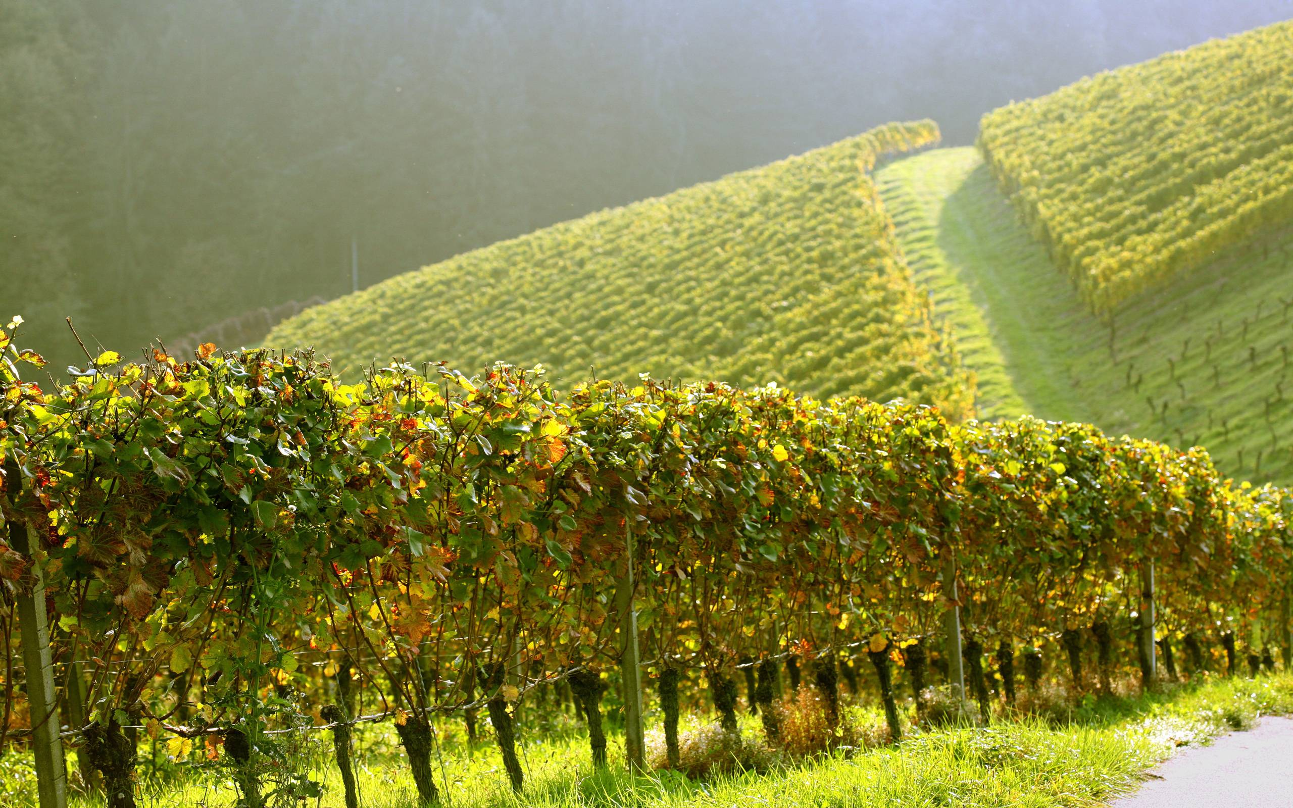 vineyard wallpapers wallpaper cave