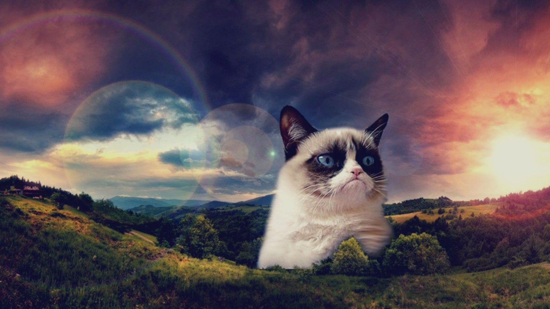 grumpy cat hd wallpapers - photo #3